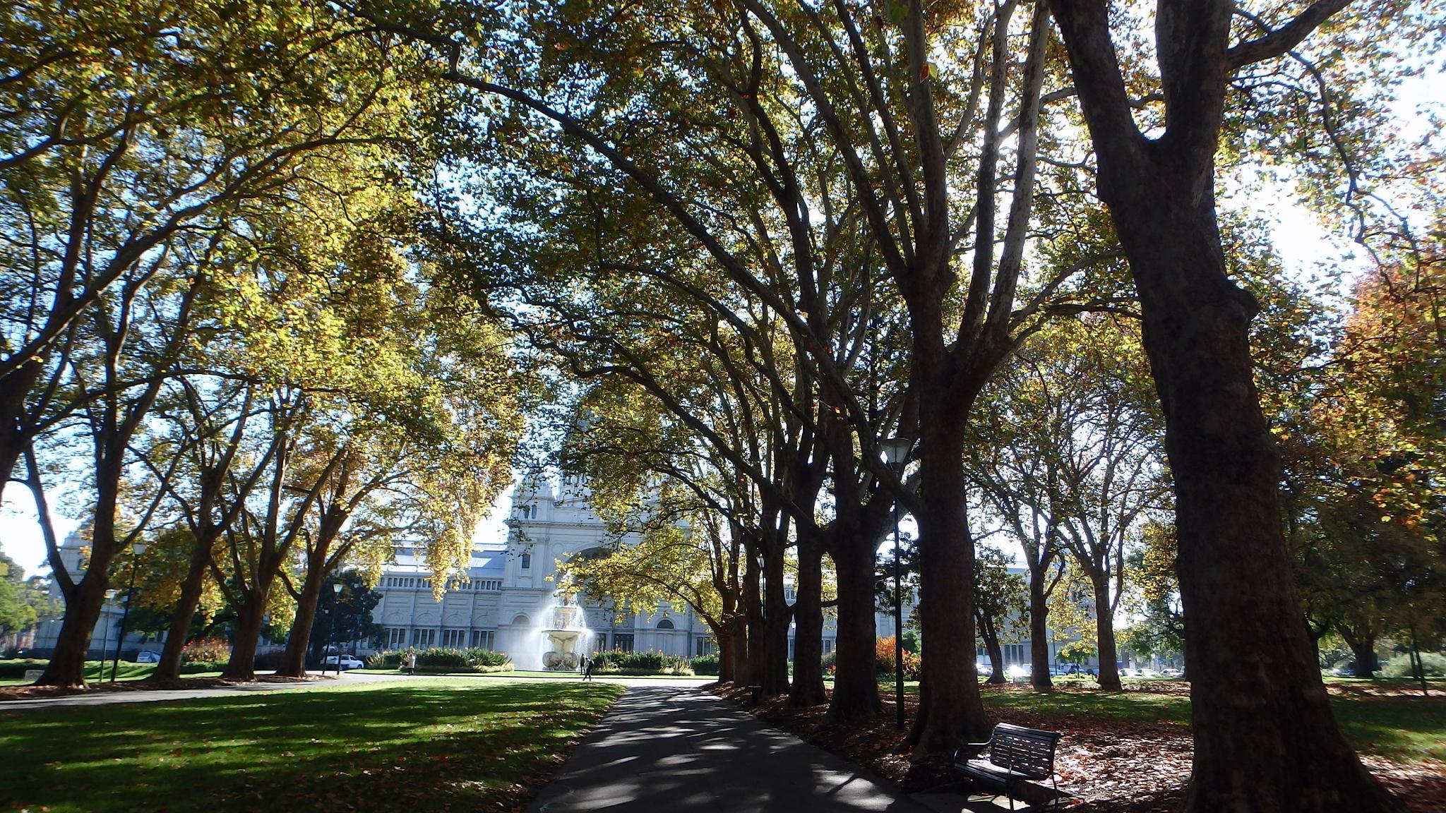 Autumn in Melbourne by sam medzic