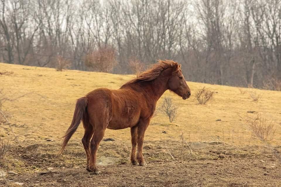 horsing around by guitarplayer2571