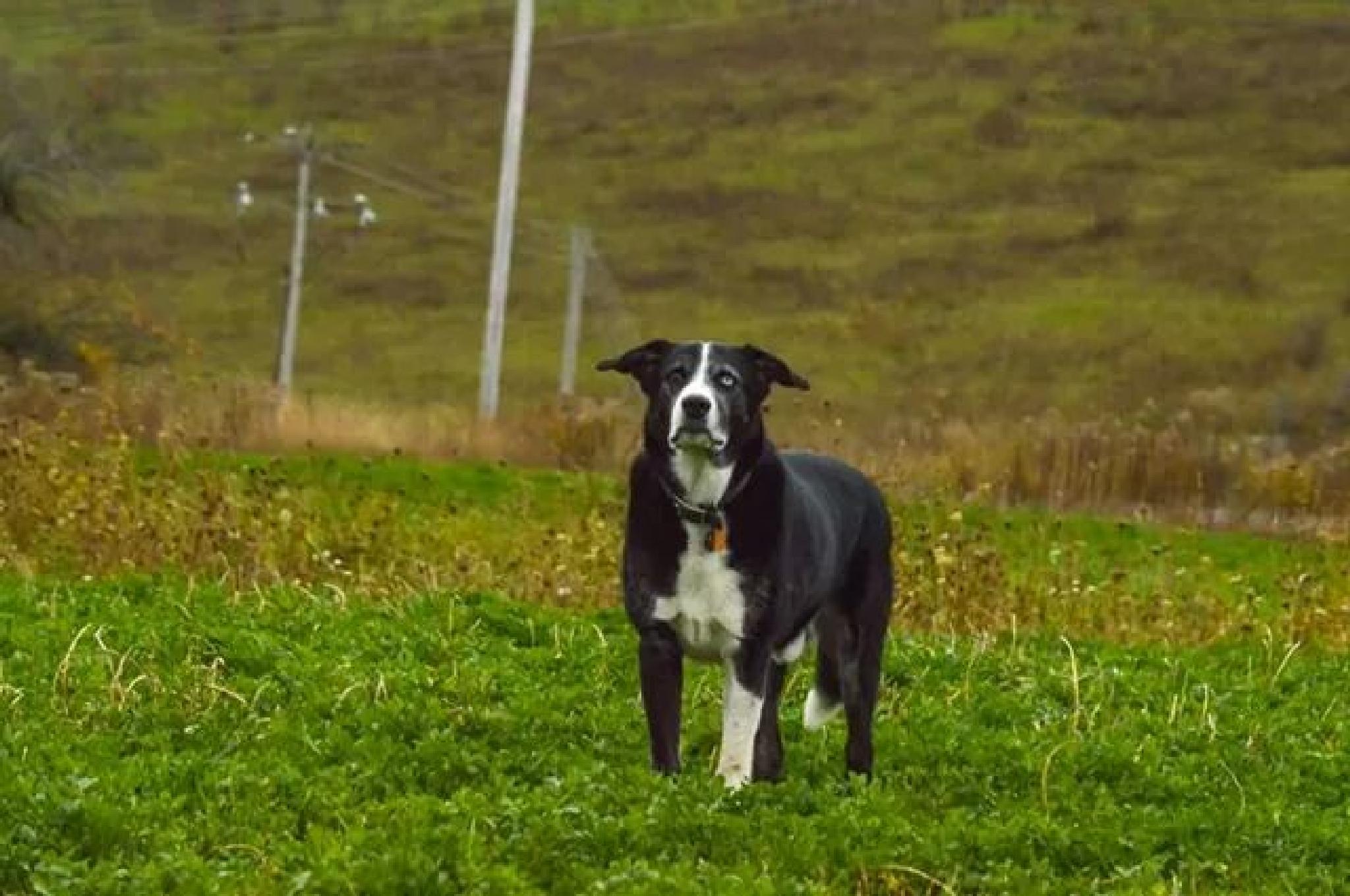 Photo in Animal #dog #animal #pet