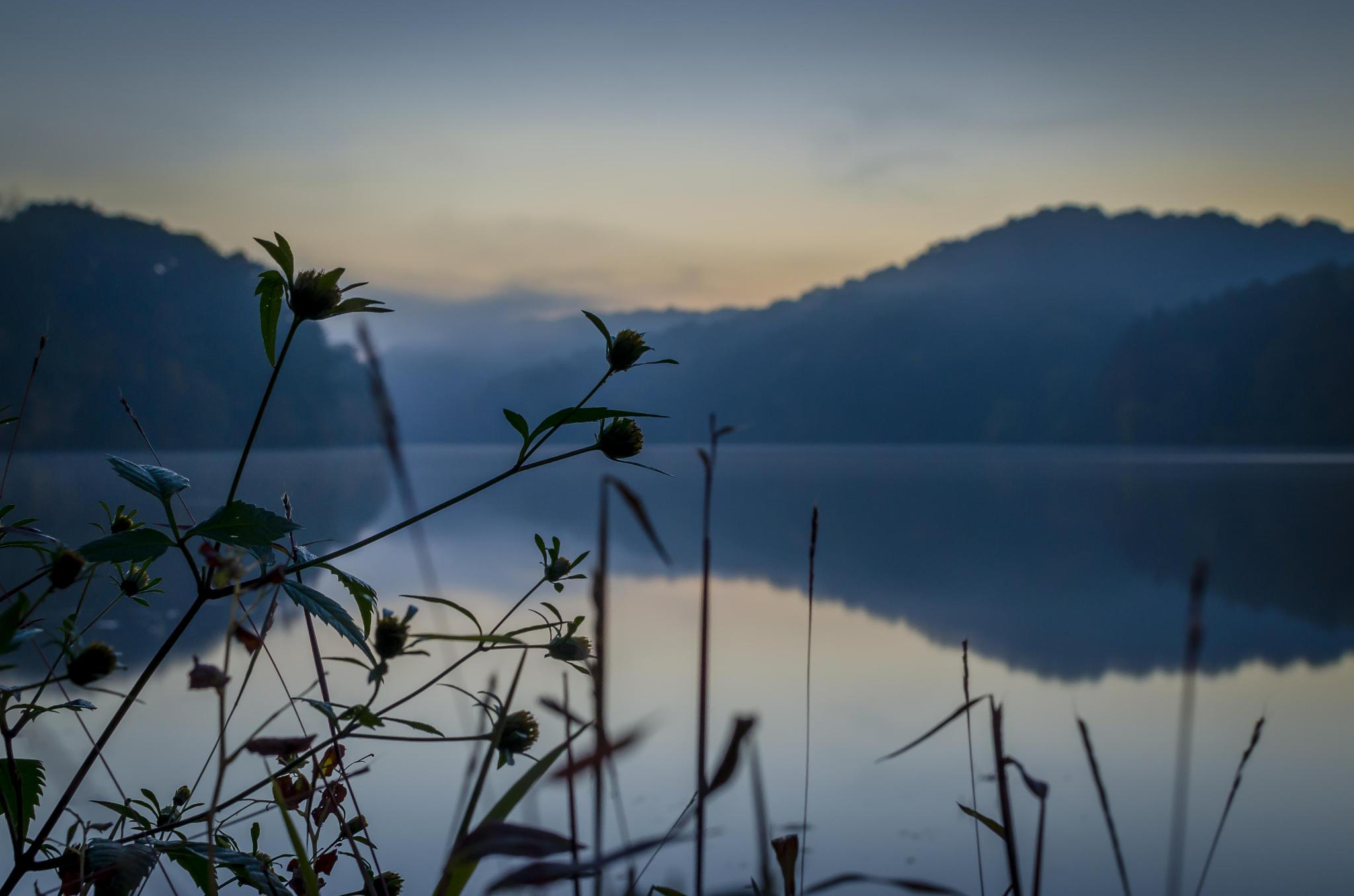 Photo in Fine Art #sunset #lake #reflections #wildflowers