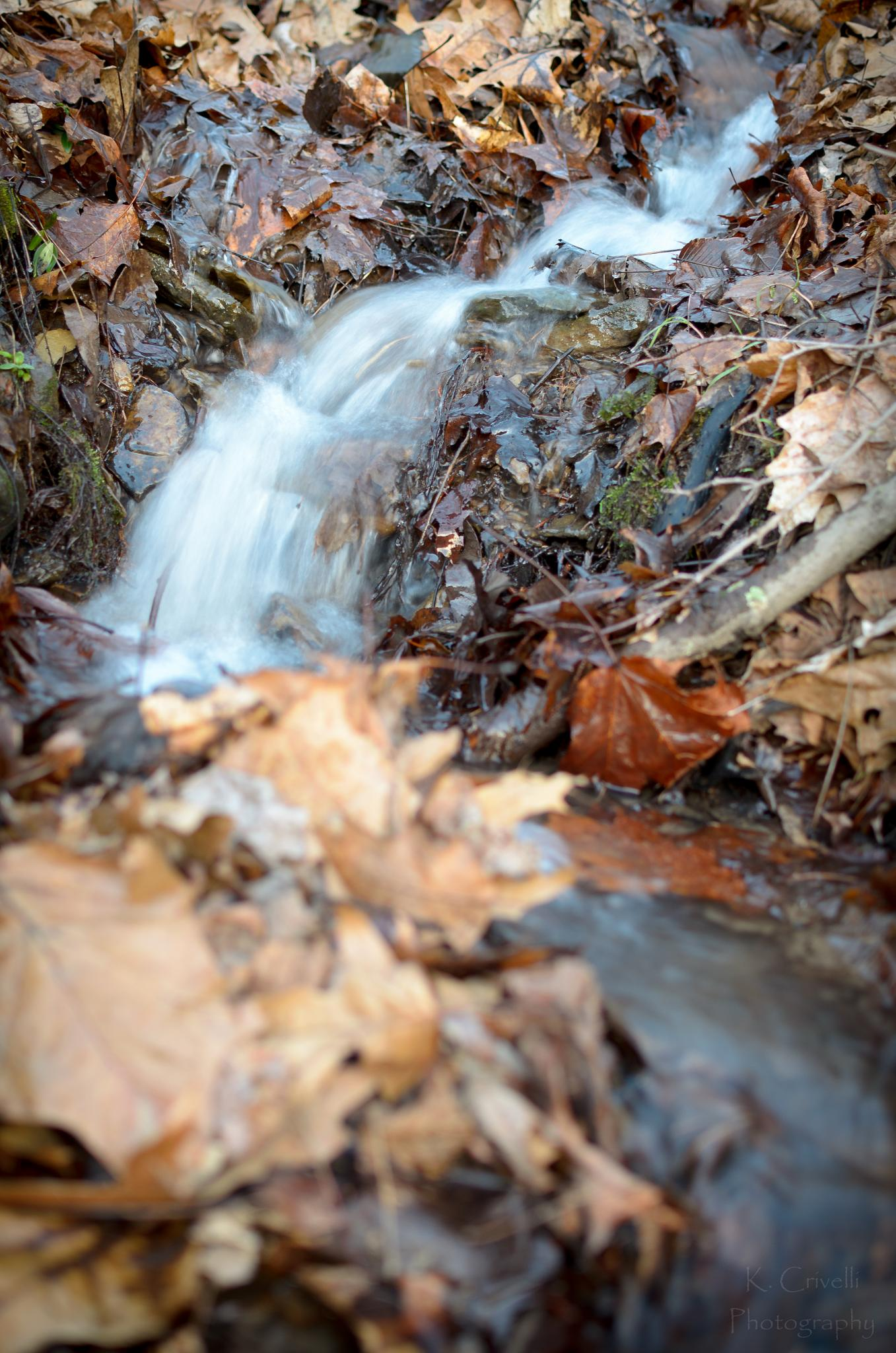 Winding Stream by Kevin Crivelli