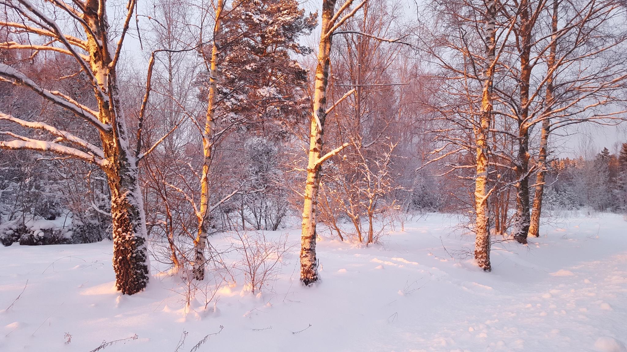 Vinter in Harka by Susanne Brännström