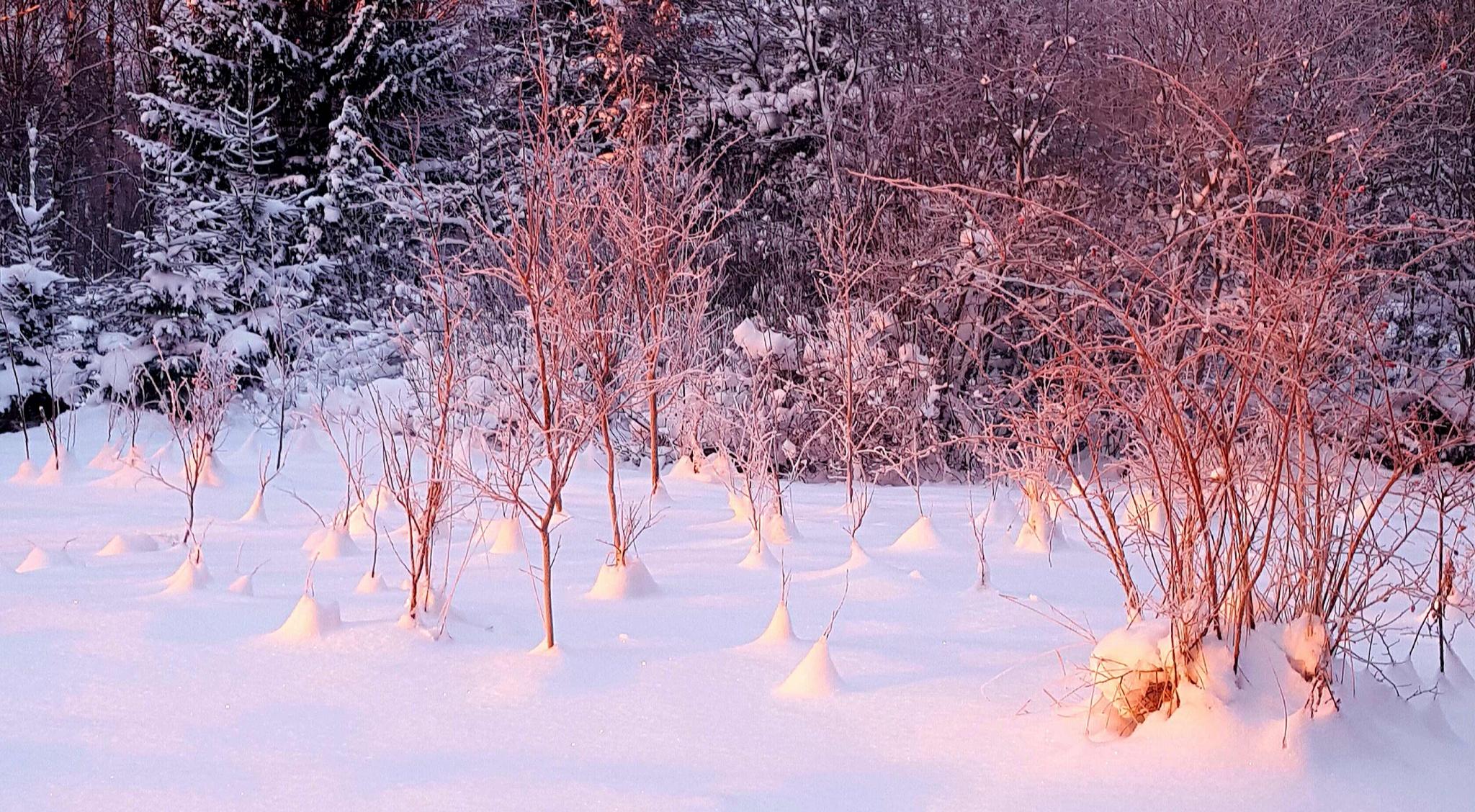 Vinterlight by Susanne Brännström