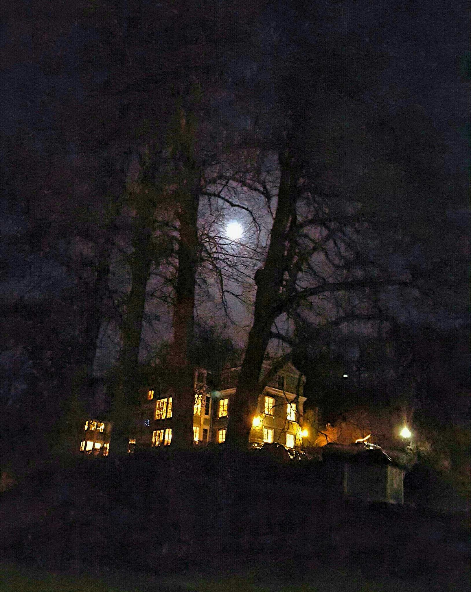Moonlight  by Susanne Brännström