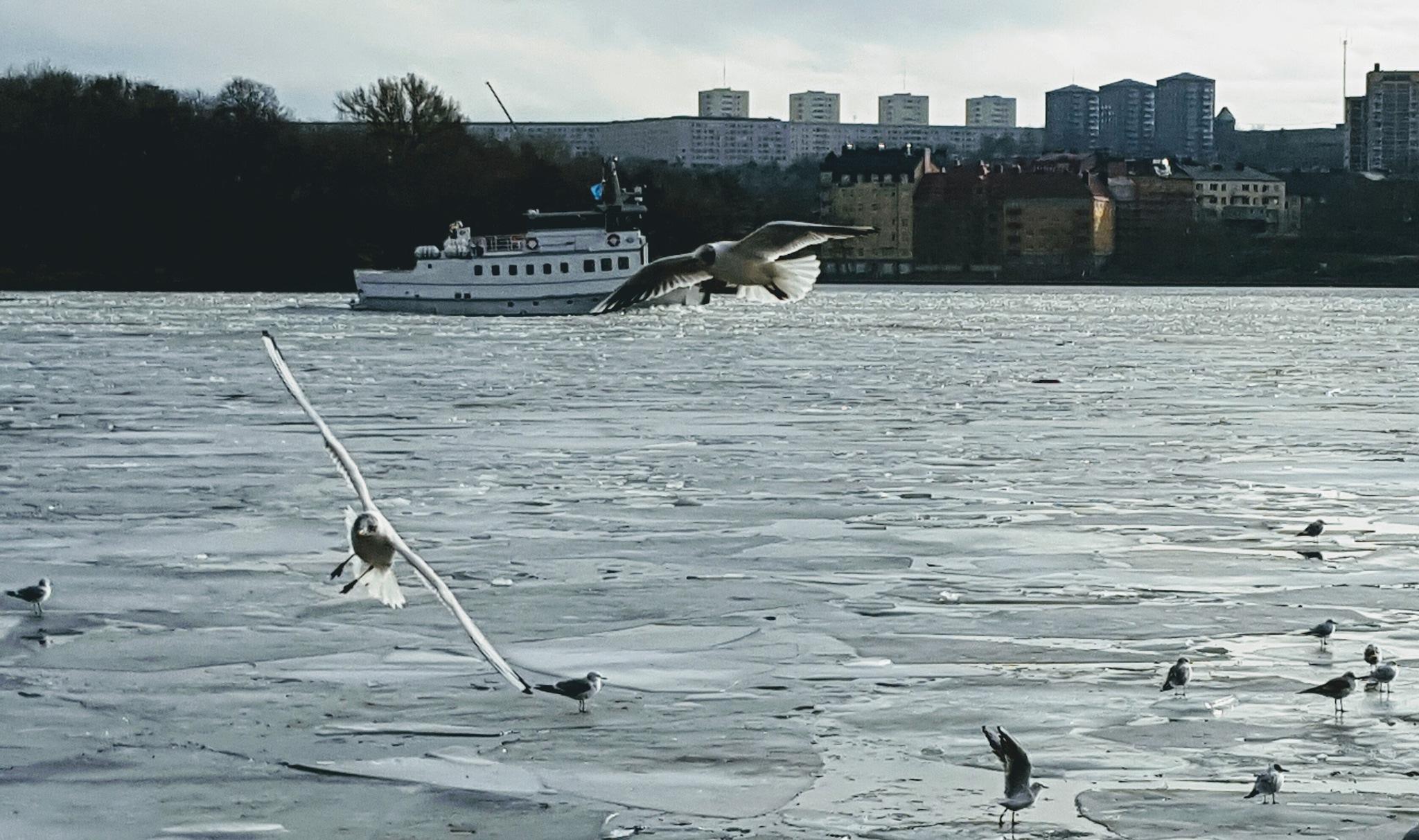 Winter in Stockholm  by Susanne Brännström