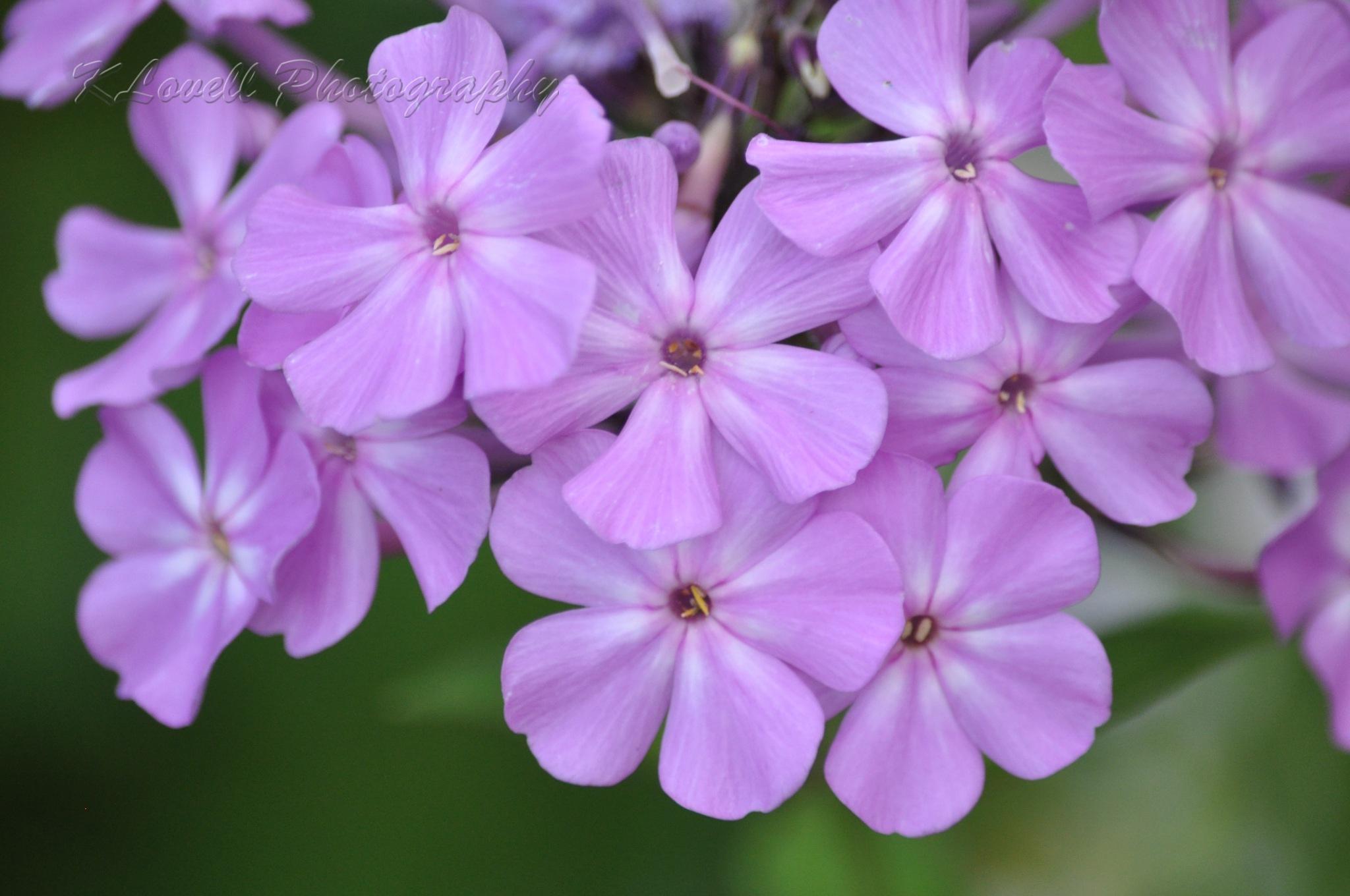 Purple Pretty by Kendra Lovell