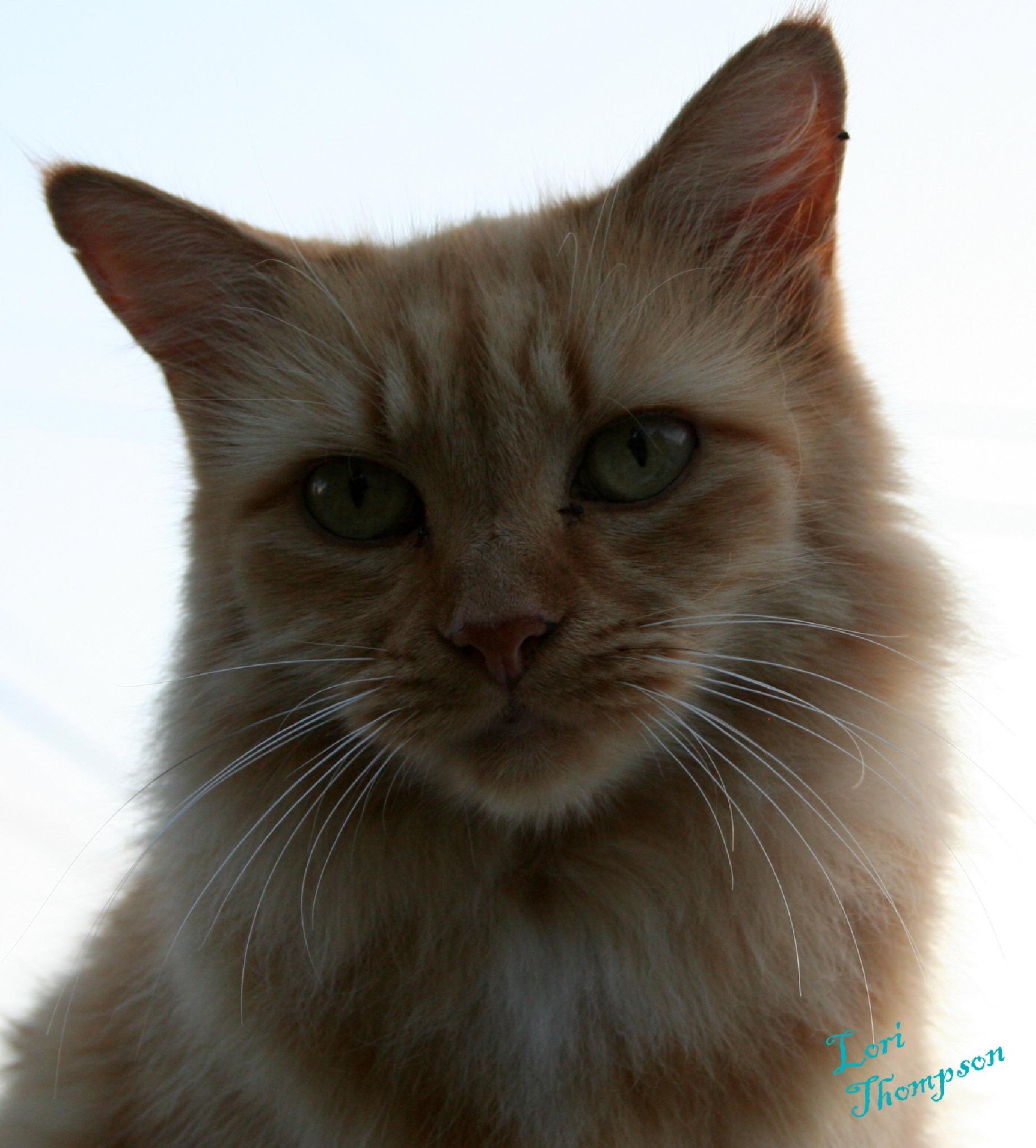 Goldie by lori.thompson.5011