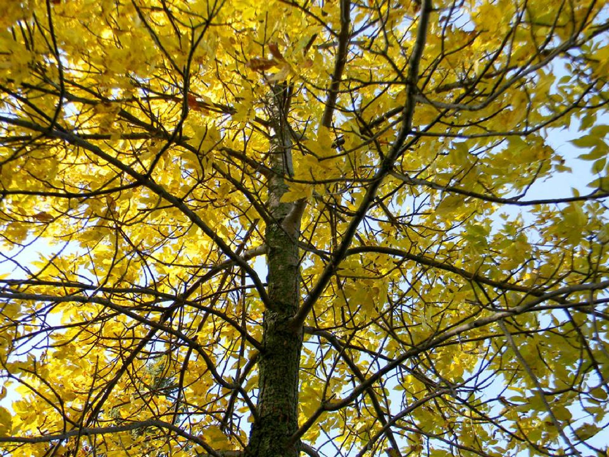 Photo in Nature #autum #fall #tree #nature