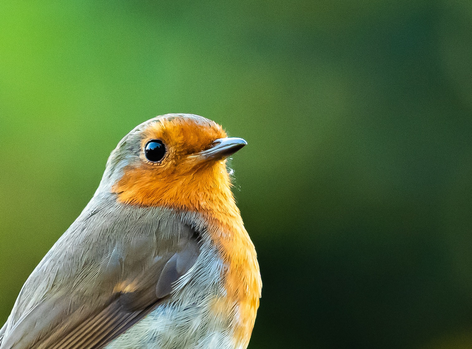 Robin by dean.russell.3551