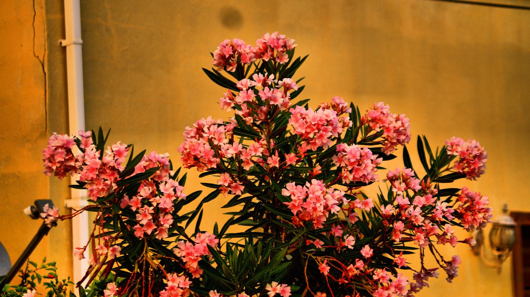 Abundant flowers  by jwitherwax