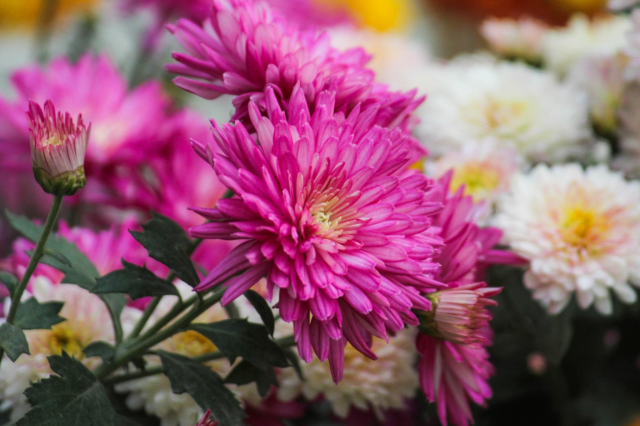 Flower of winter by bodhisatya