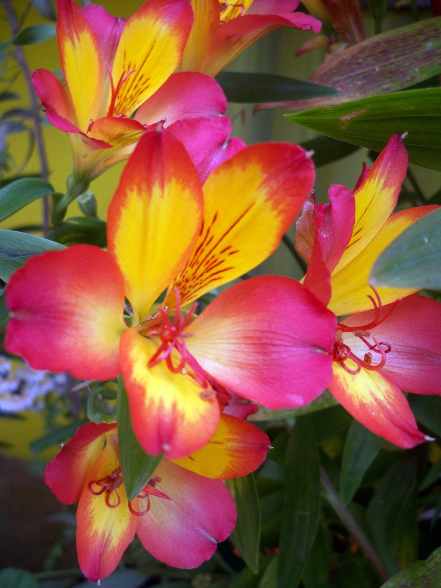 Flower by bodhisatya