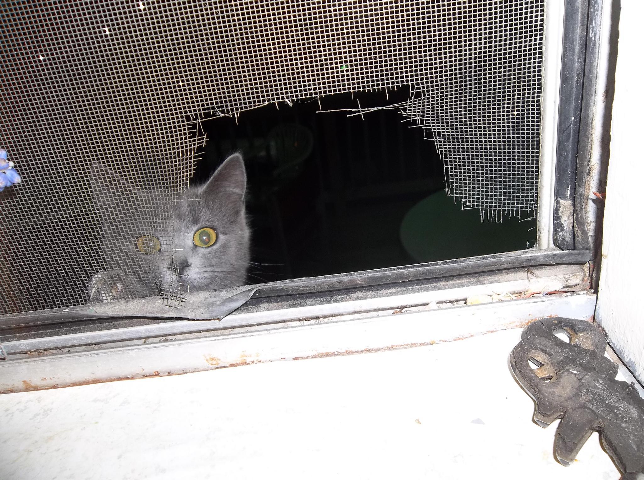 snappy the cat by melissa tackett