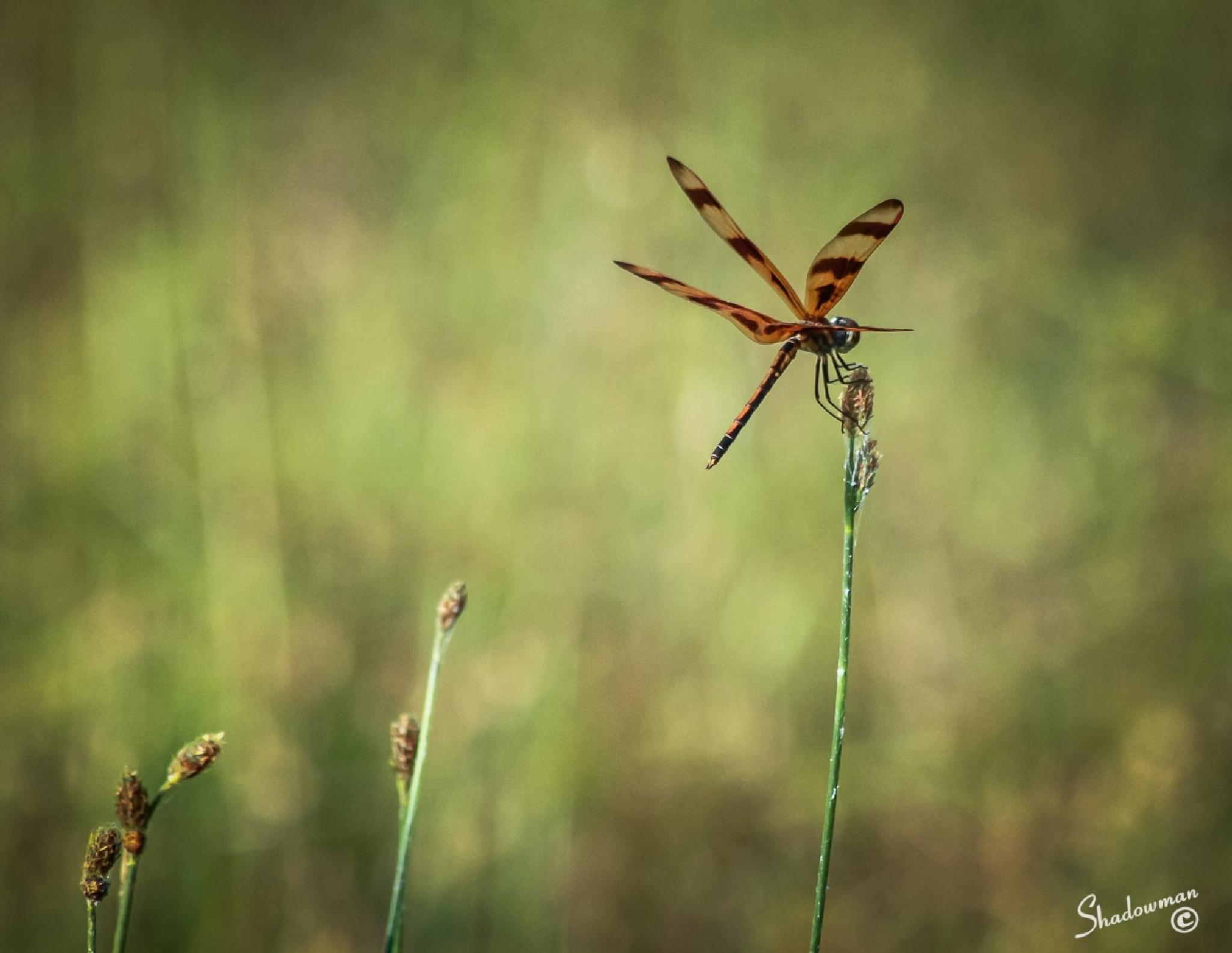 Photo in Macro #nature #minimalist #insects