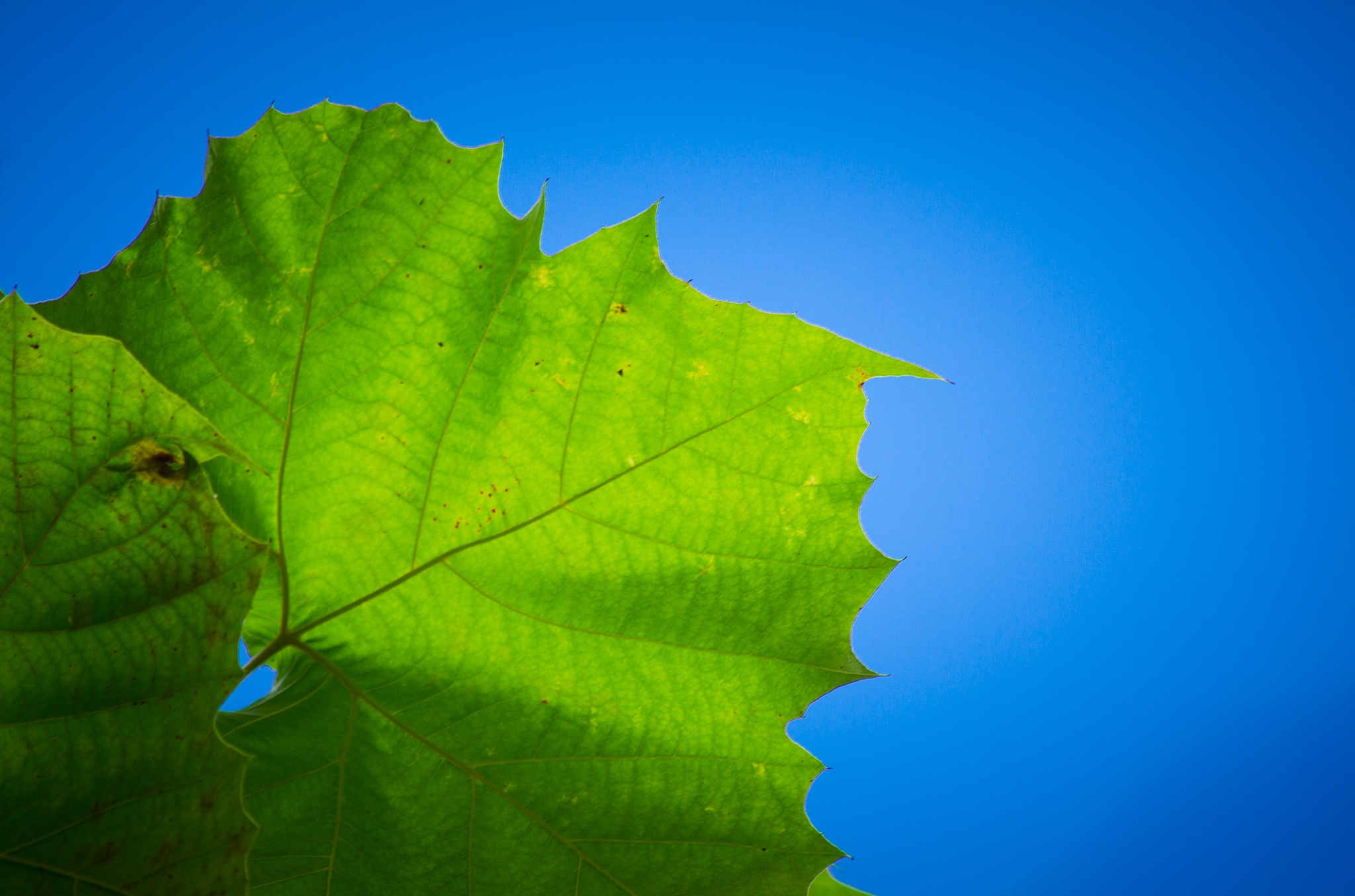 The Green Leaf by In Focus 5.6 Photography