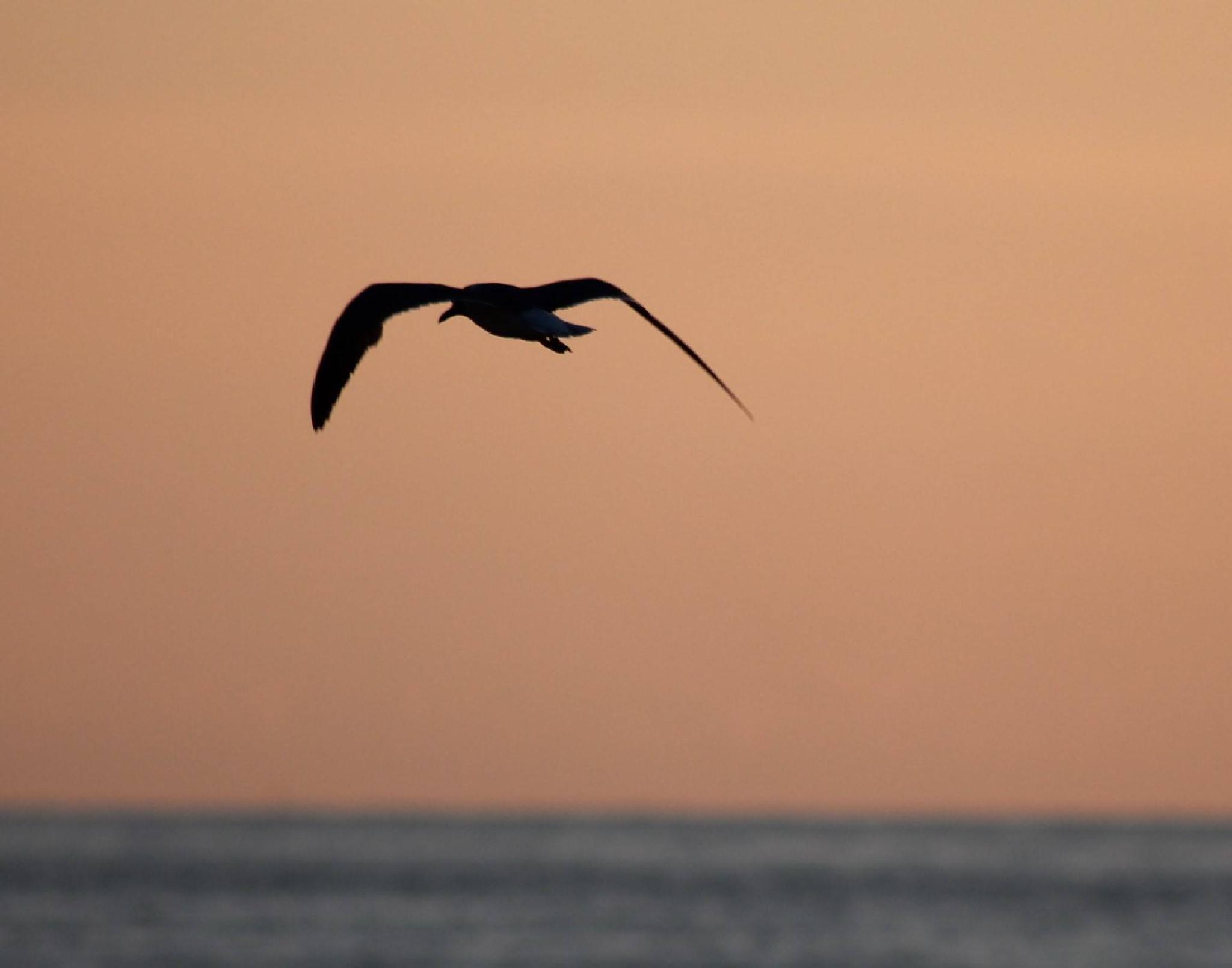 in flight by caroline.digloria