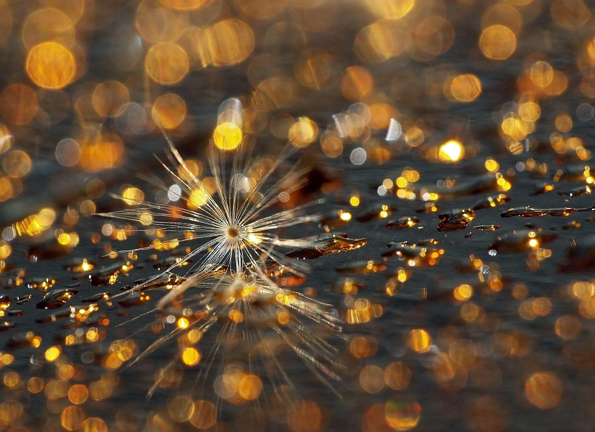 Drops by Katona Flórián