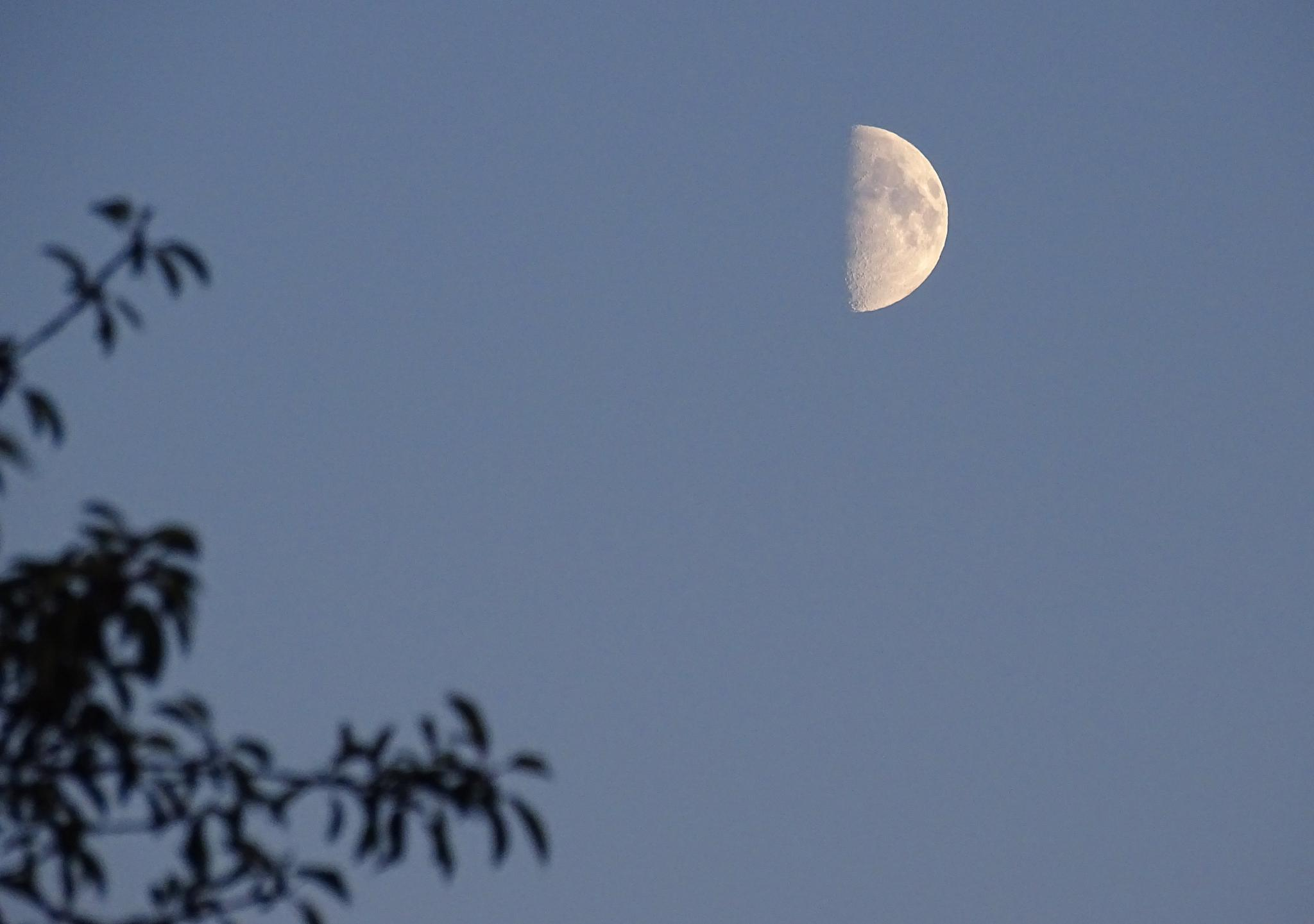 The moon a few days ago  by Pian