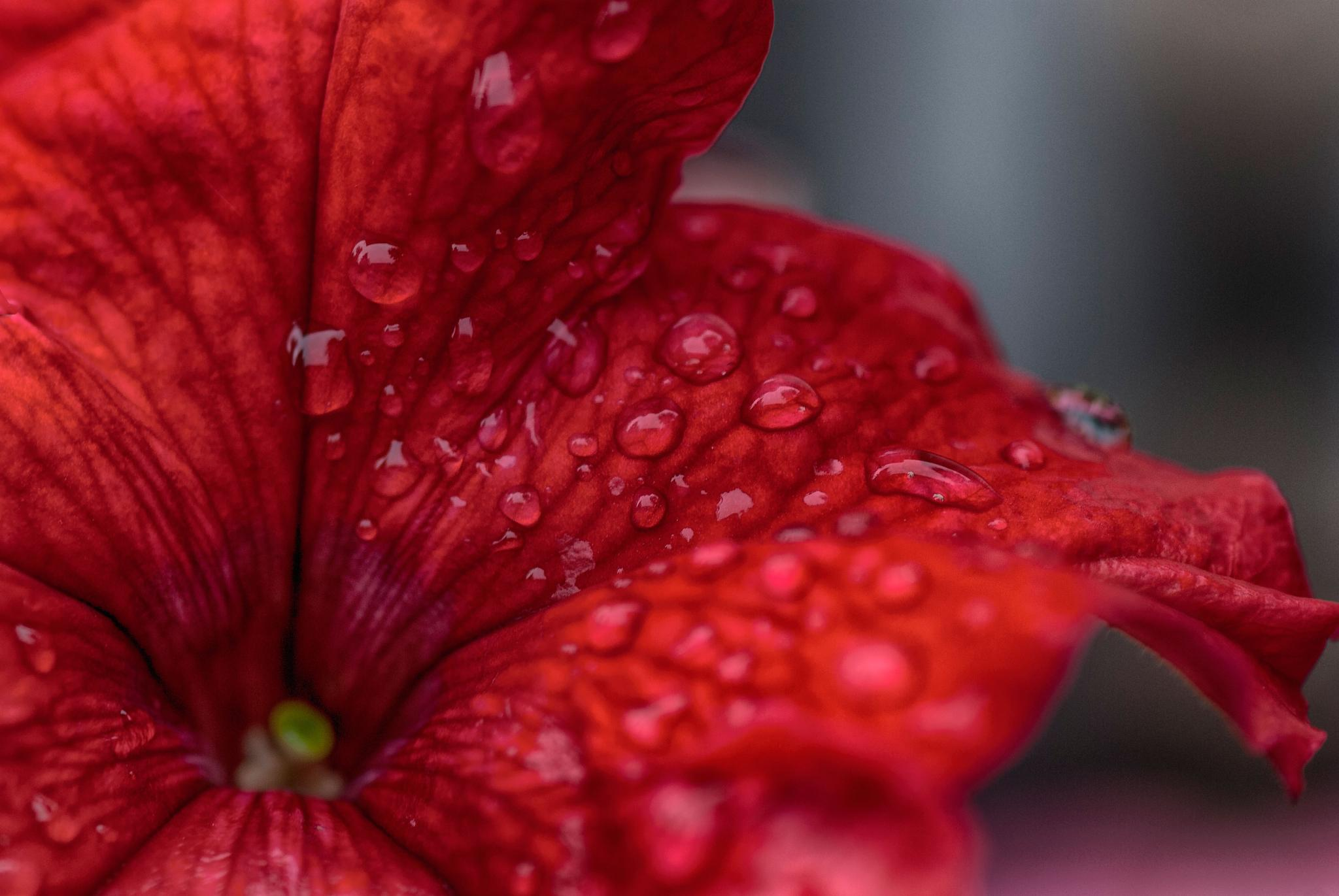 rainy#2 by beautiful flower.