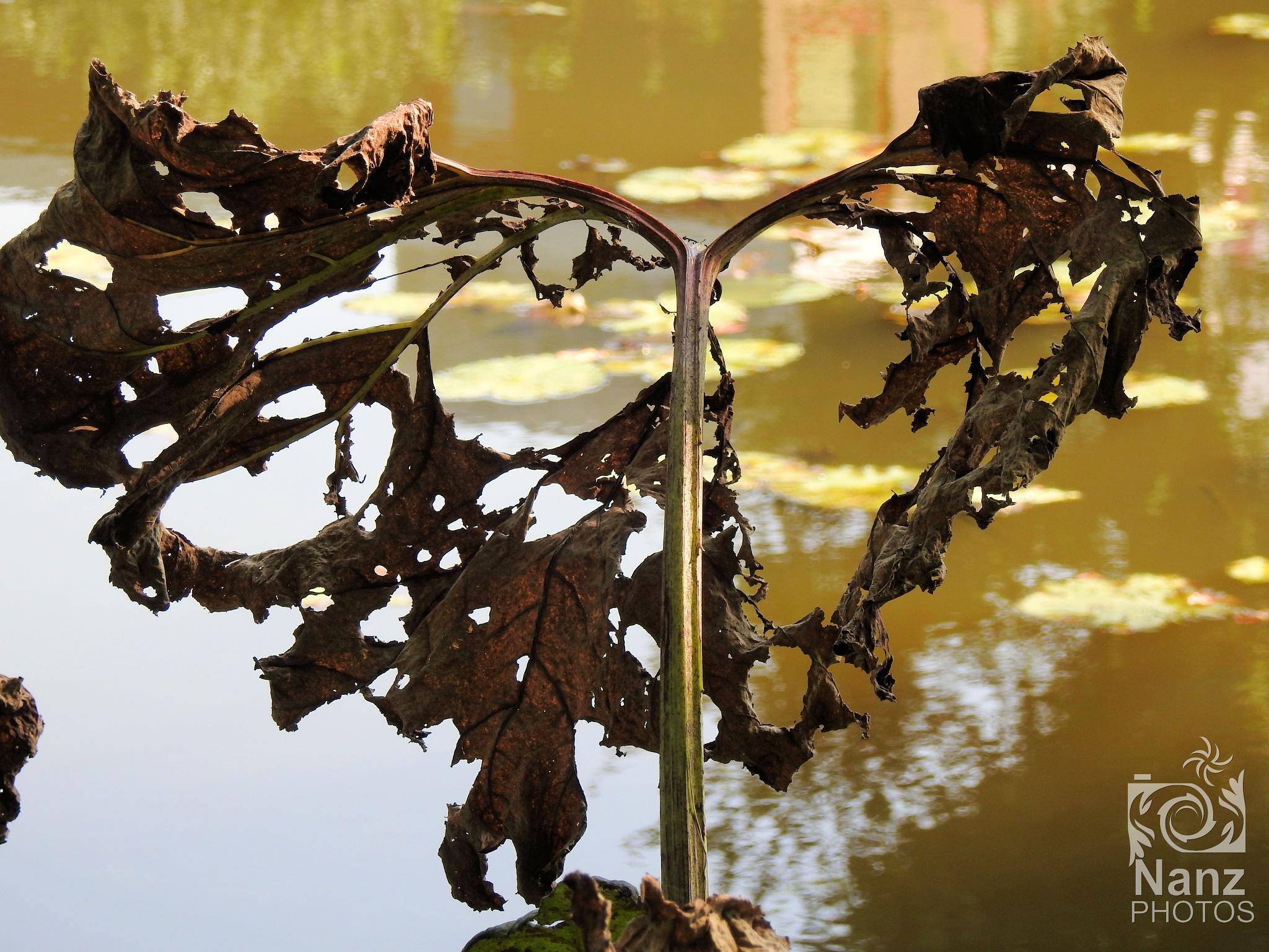 Fall by Nancy Zuiderwijk