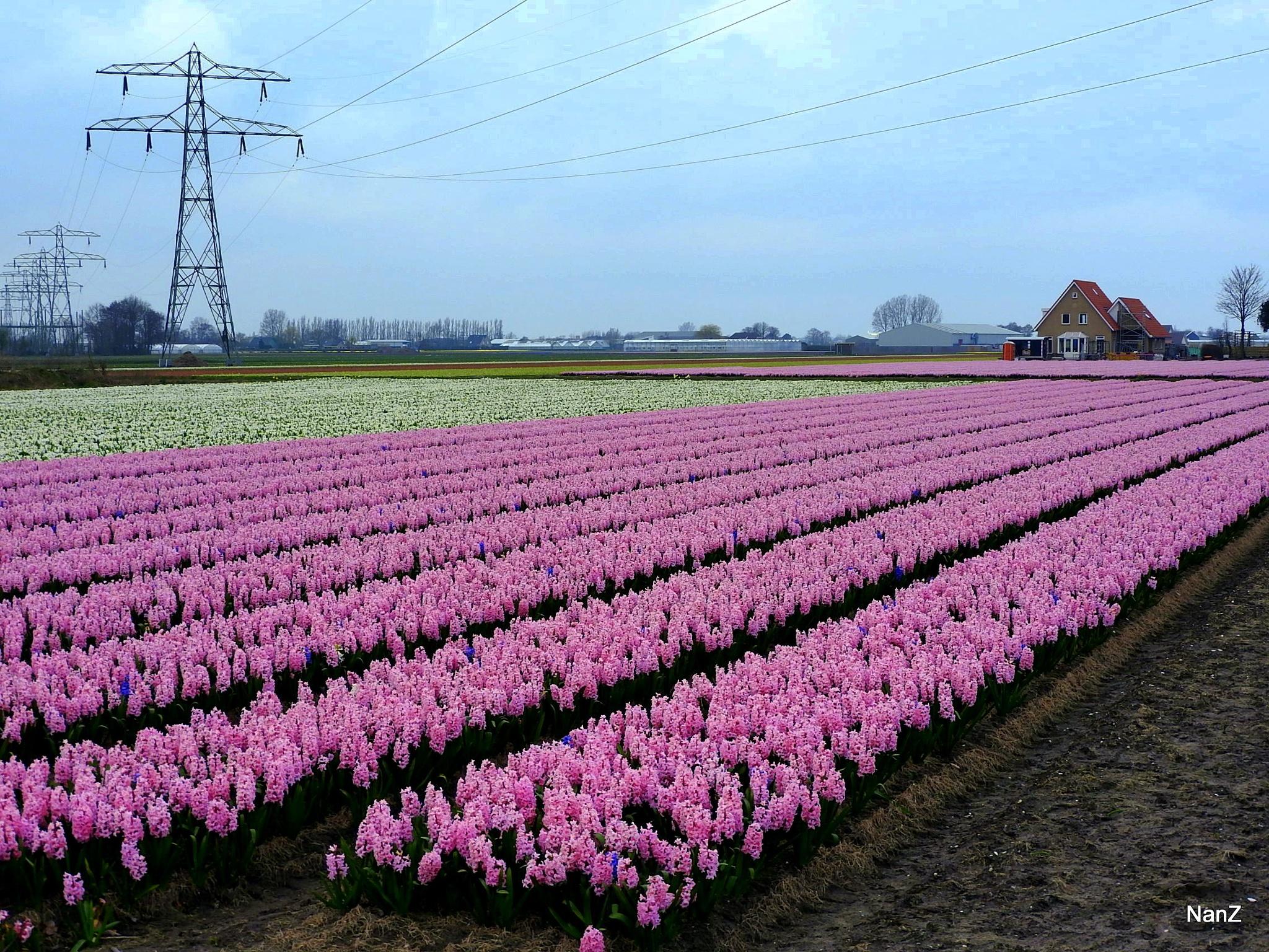 Yeah, spring by Nancy Zuiderwijk