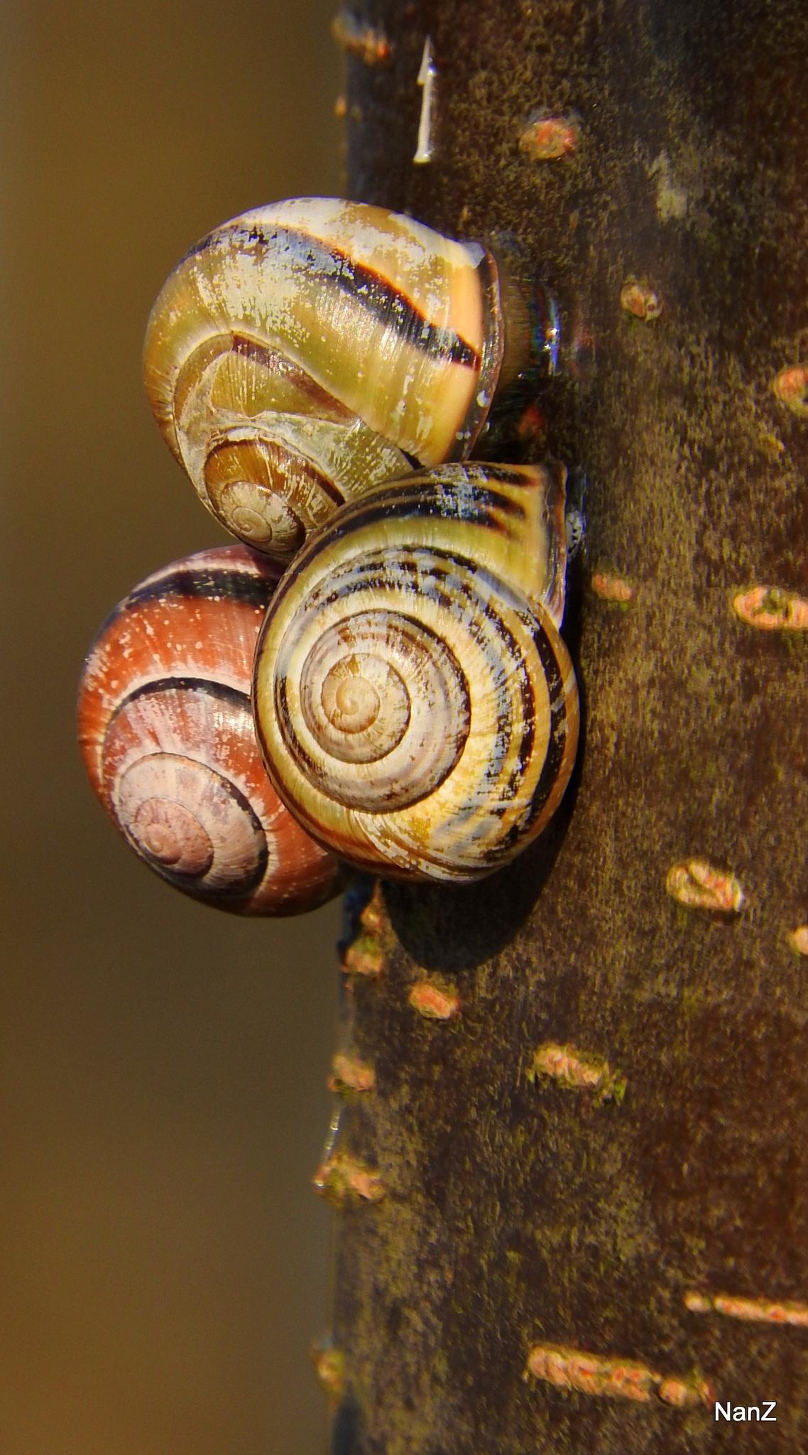 Snail meeting by Nancy Zuiderwijk