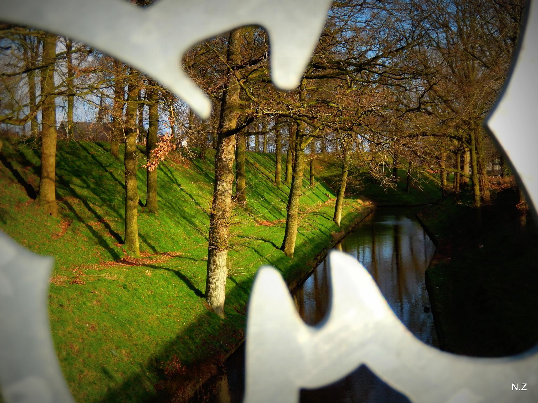 strange butterfly by Nancy Zuiderwijk