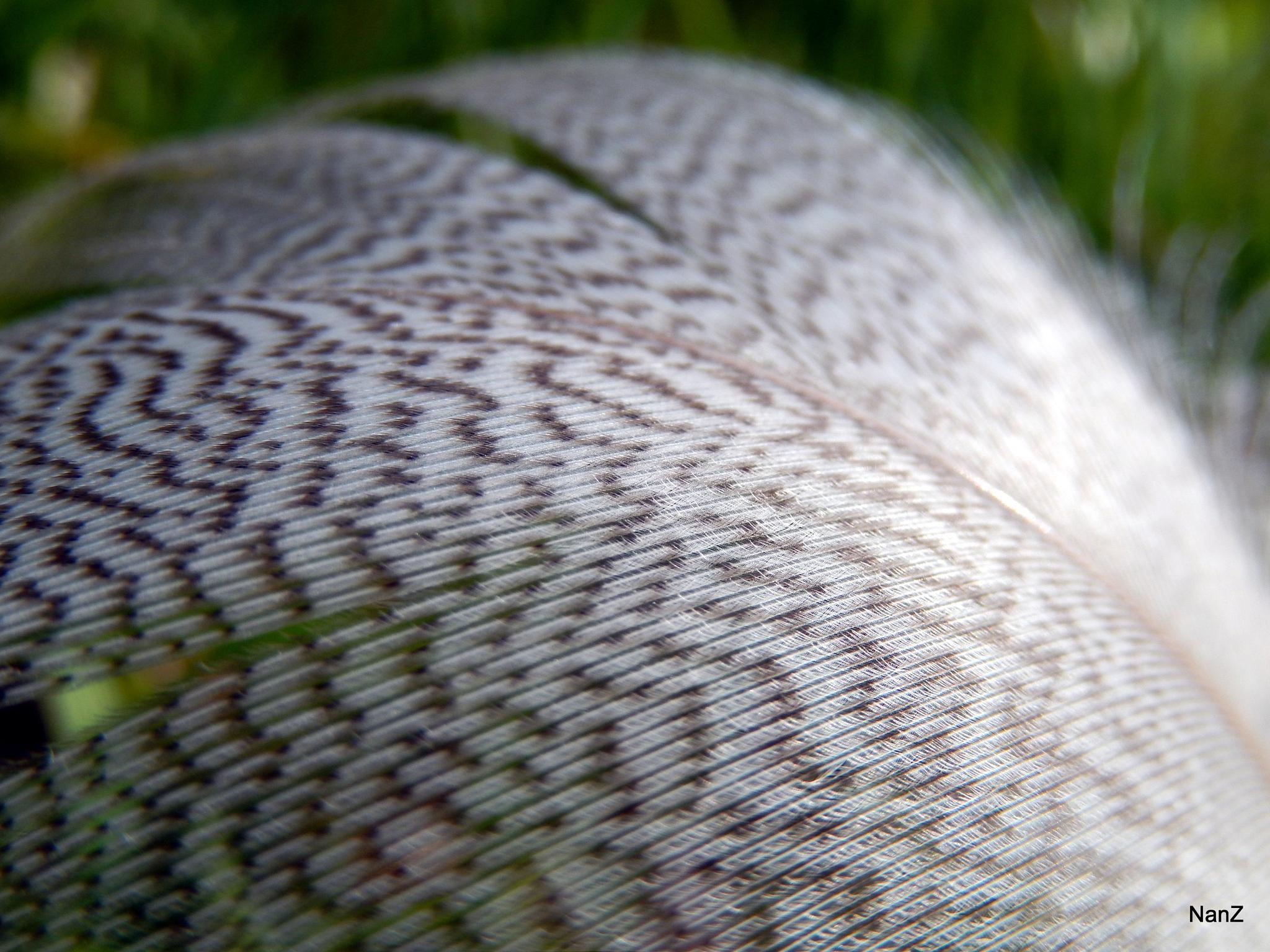 Feather by Nancy Zuiderwijk