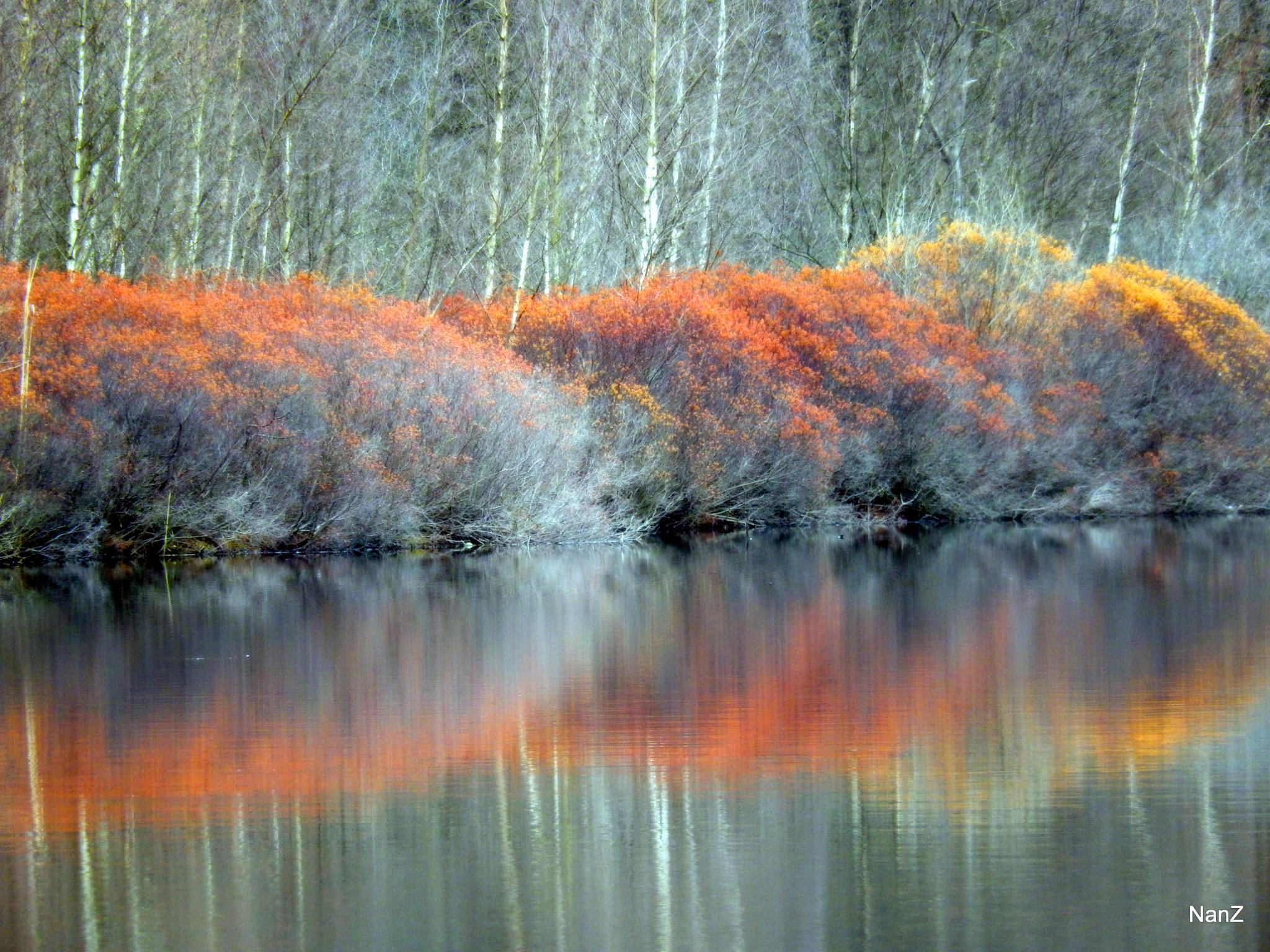 Orange by Nancy Zuiderwijk