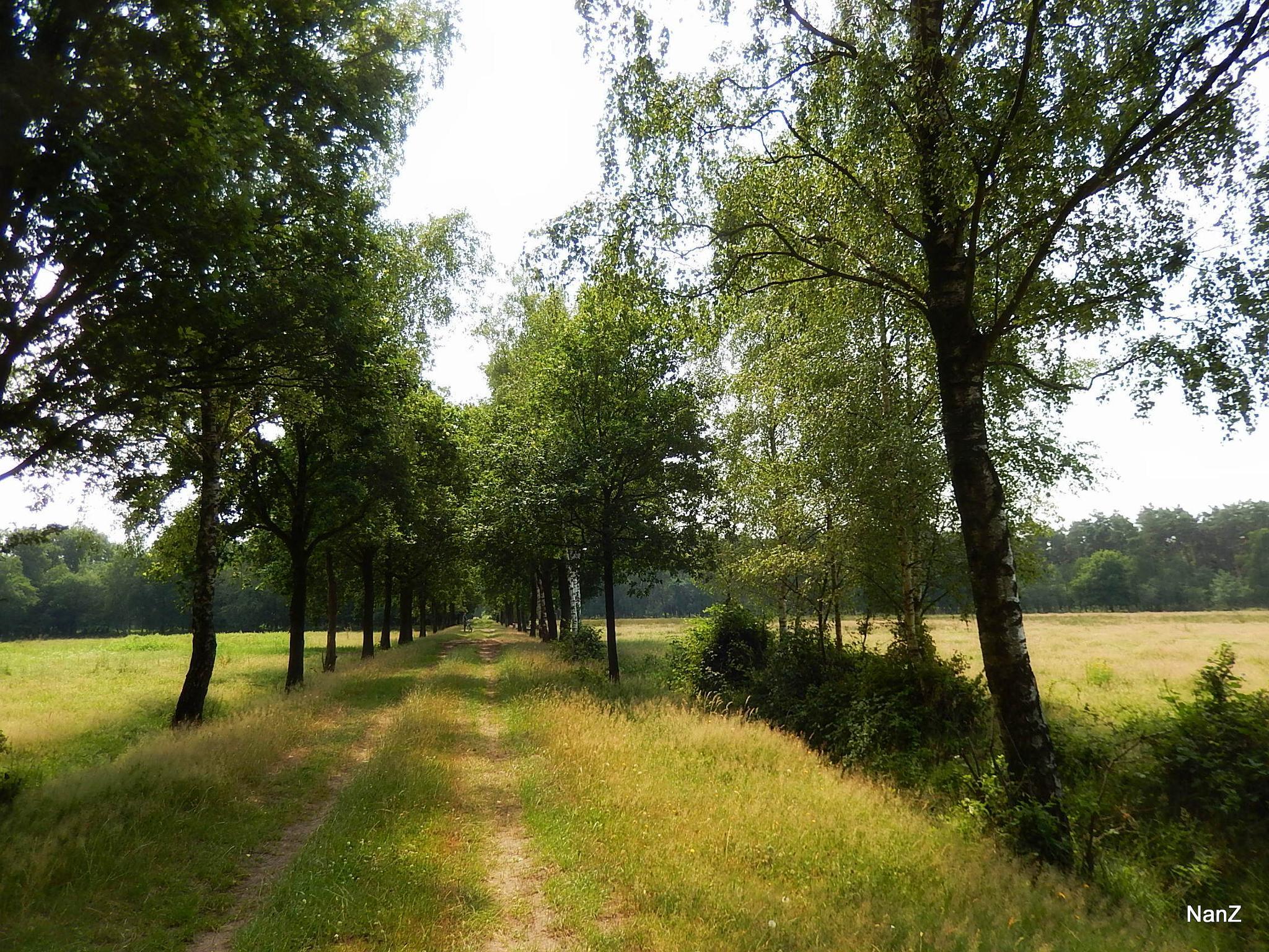 Brabant by Nancy Zuiderwijk