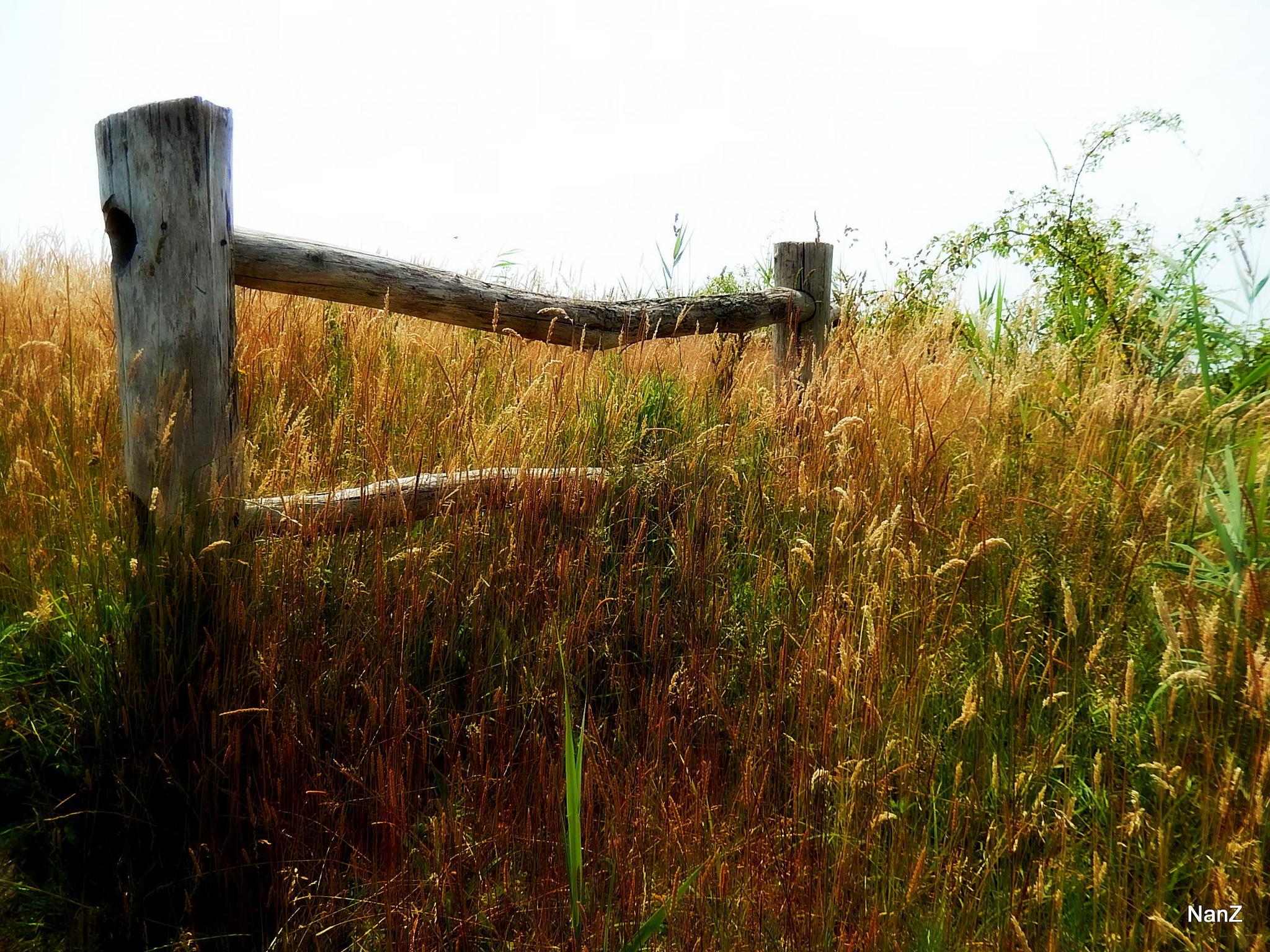 fence by Nancy Zuiderwijk