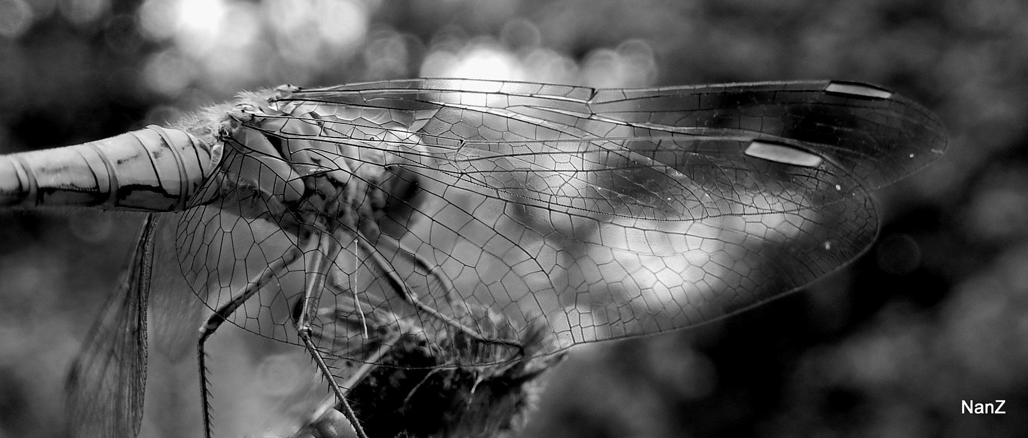 dragonfly III by Nancy Zuiderwijk