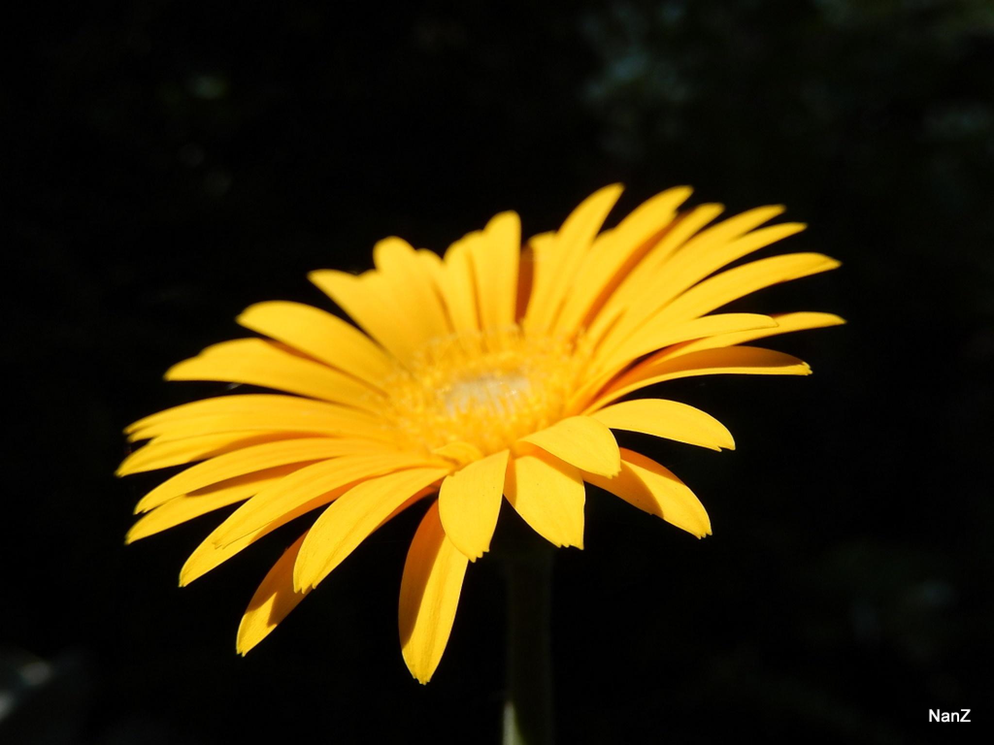 sunny by Nancy Zuiderwijk