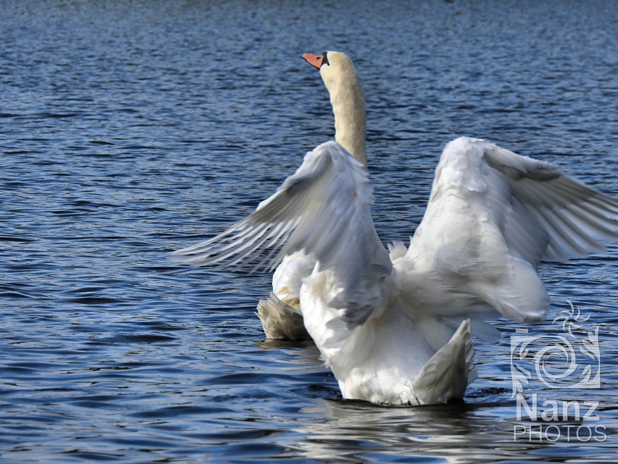 take off by Nancy Zuiderwijk