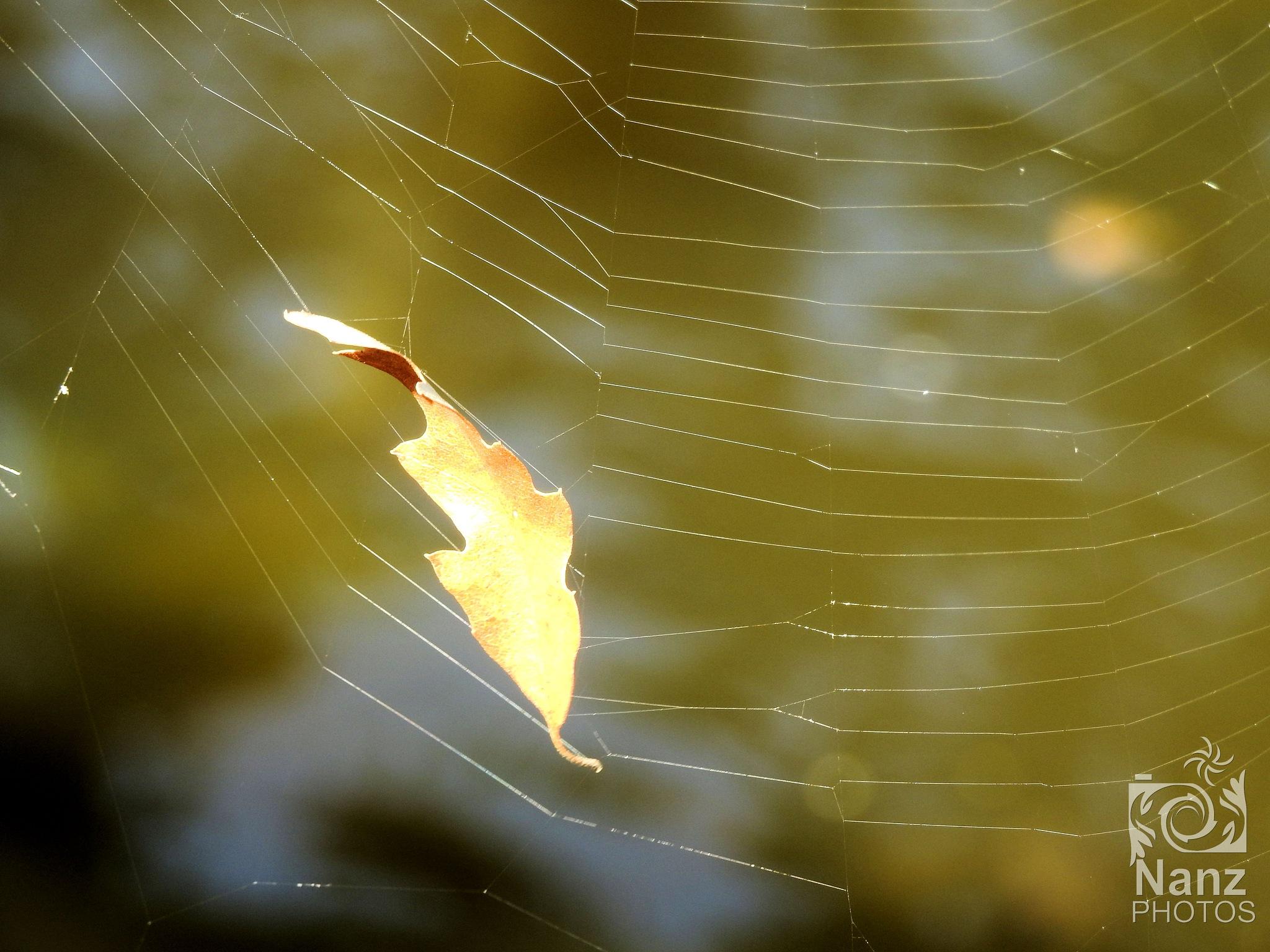 Leaf by Nancy Zuiderwijk