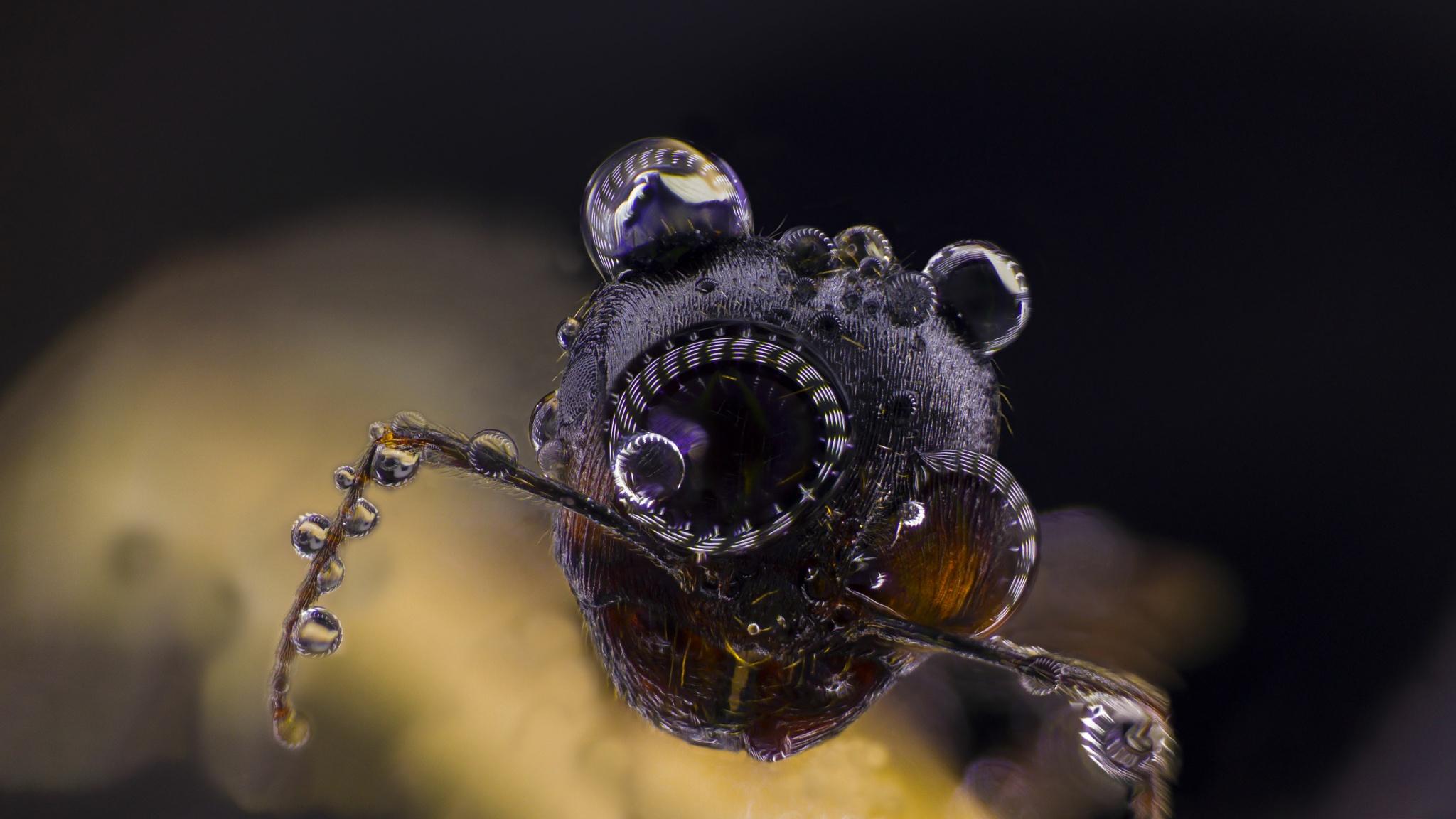 Ant by Tsvetan Ganev-CECLII