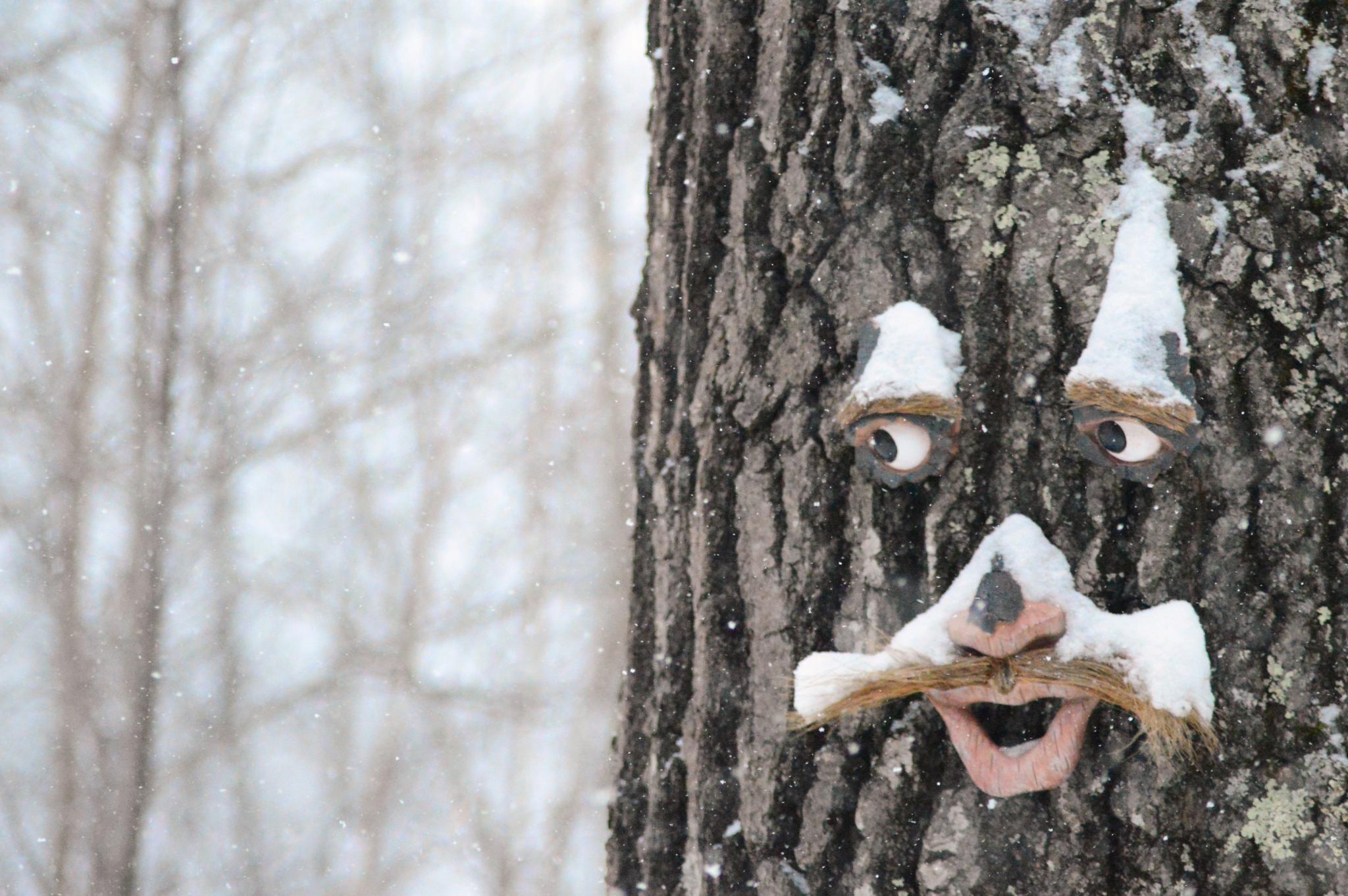 tree by patti.sebilian