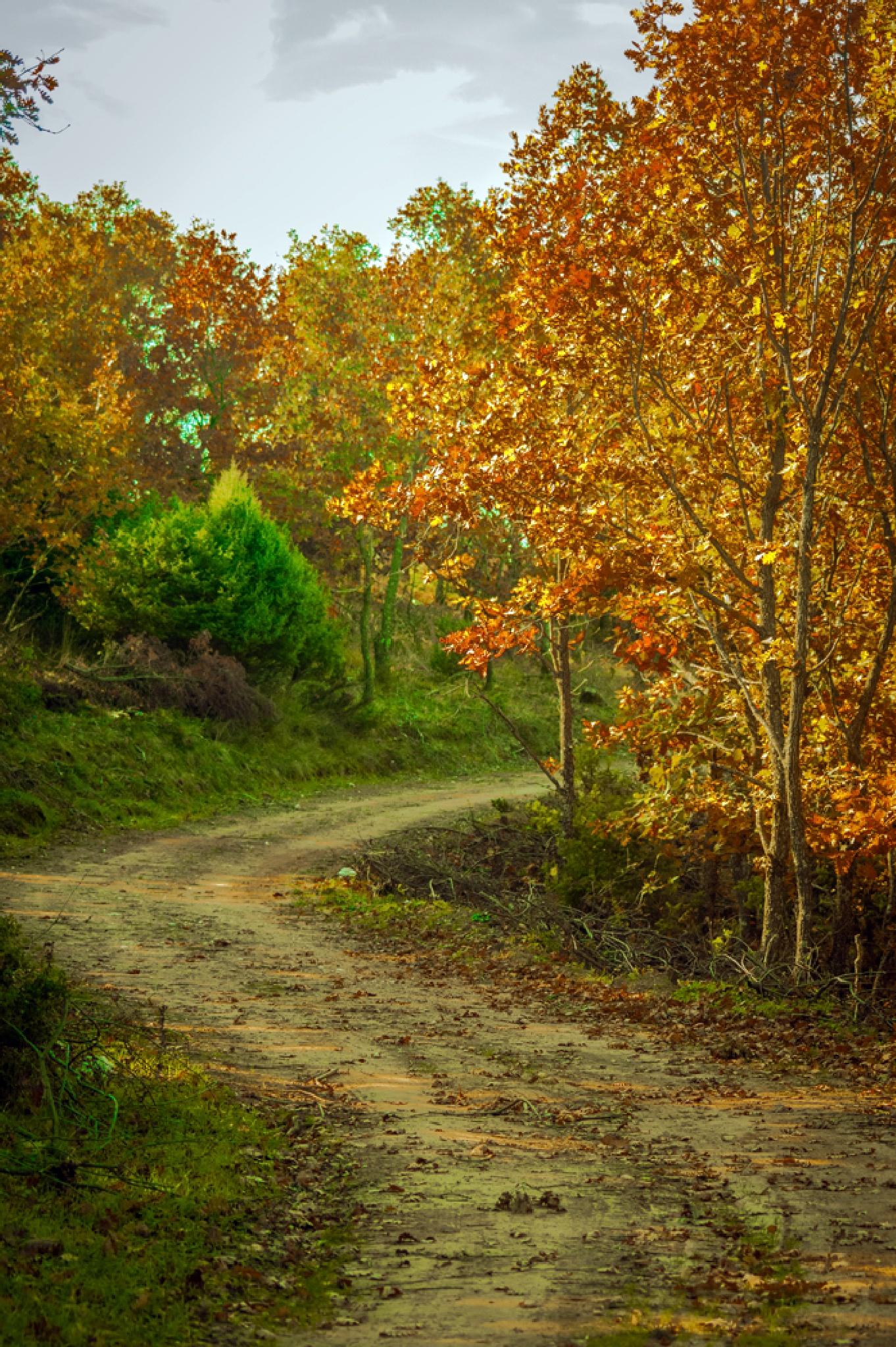 Autumn in forrest by joe.grammatikopoulos