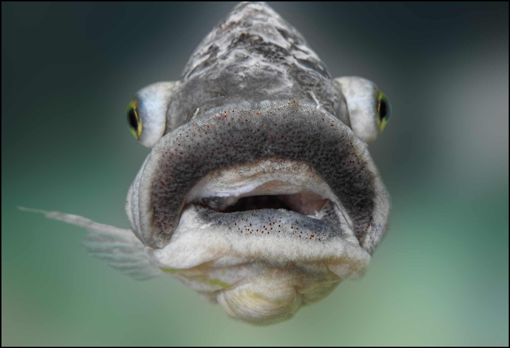 strange fish in the water by karin.kremers.5