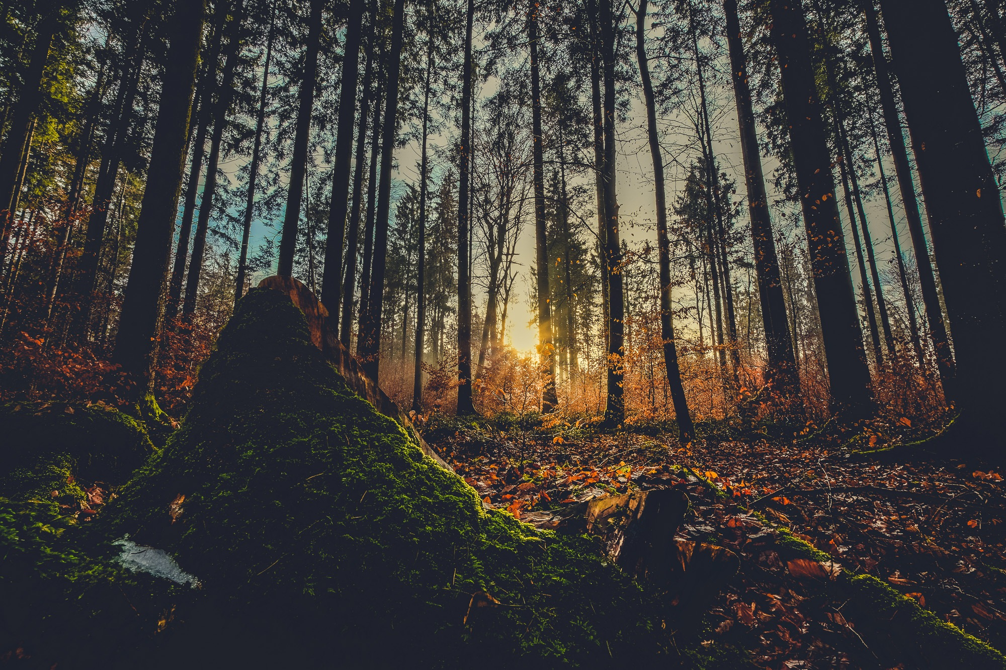 light in the wood by Hochzeitsfotograf München Charles Diehle