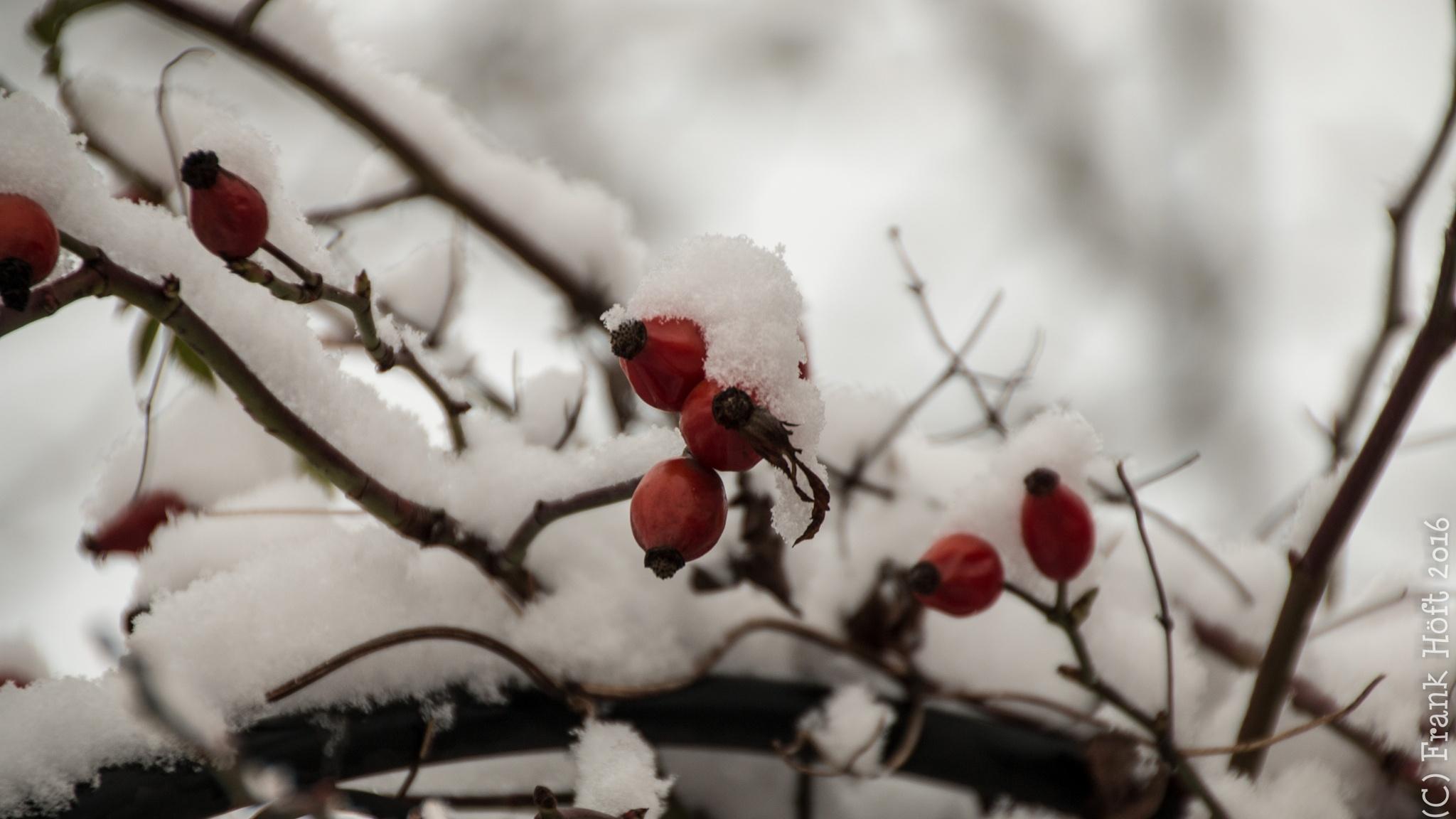 wintertime by Frank Höft