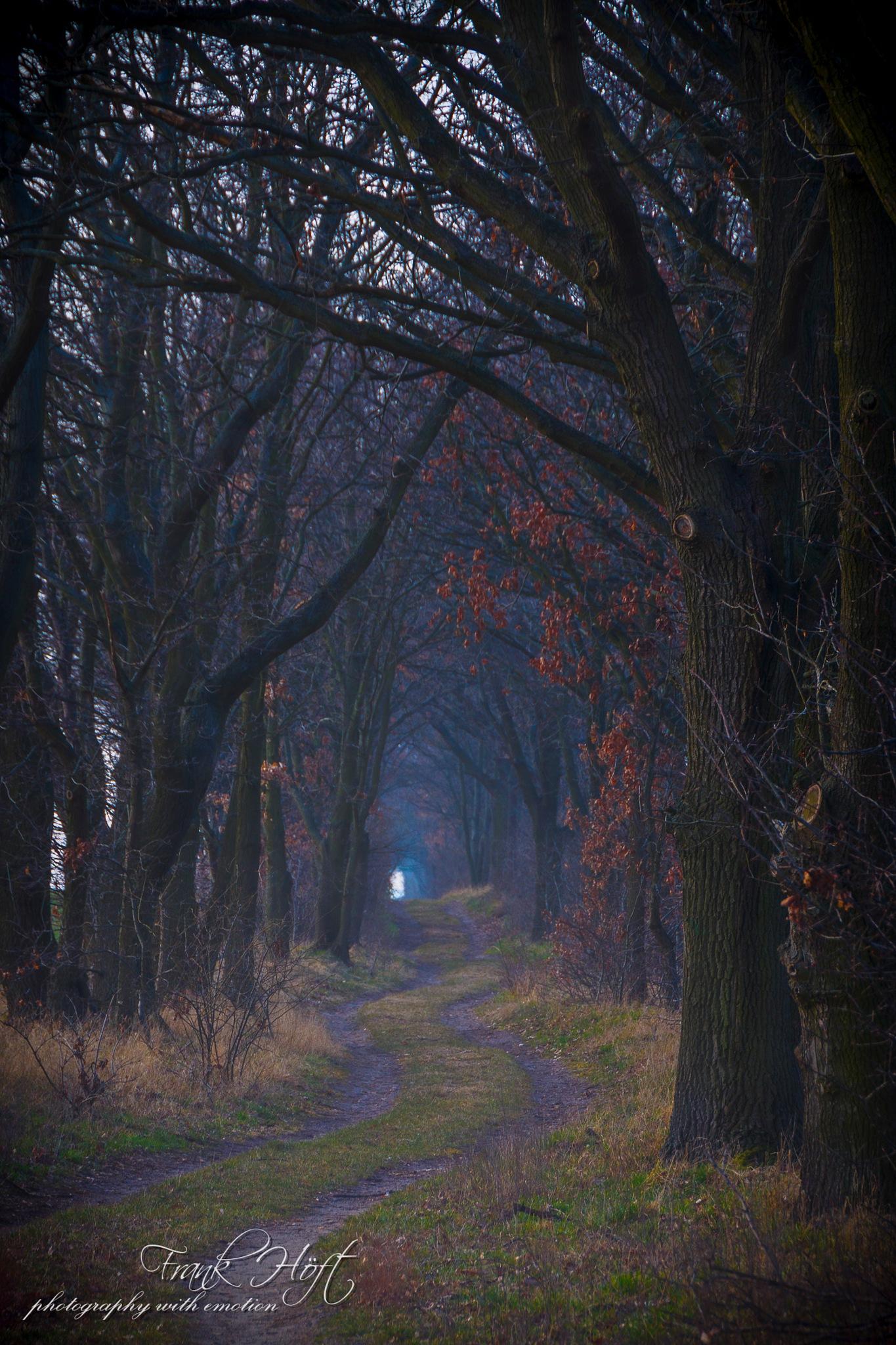 the dark way by Frank Höft