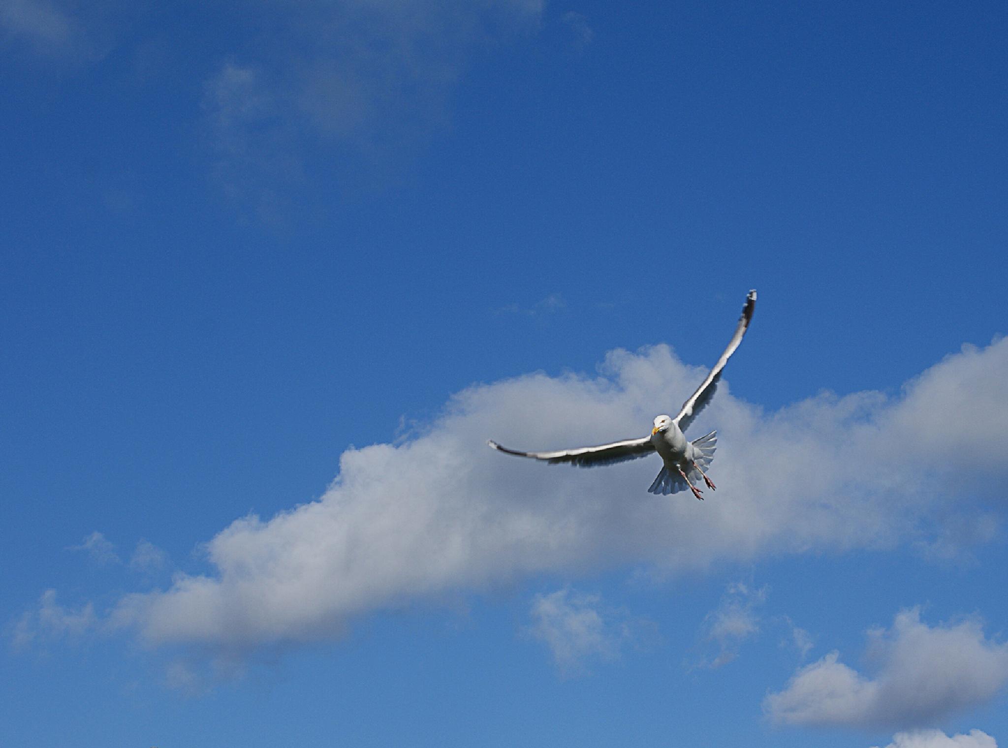 Photo in Animal #bird #sky
