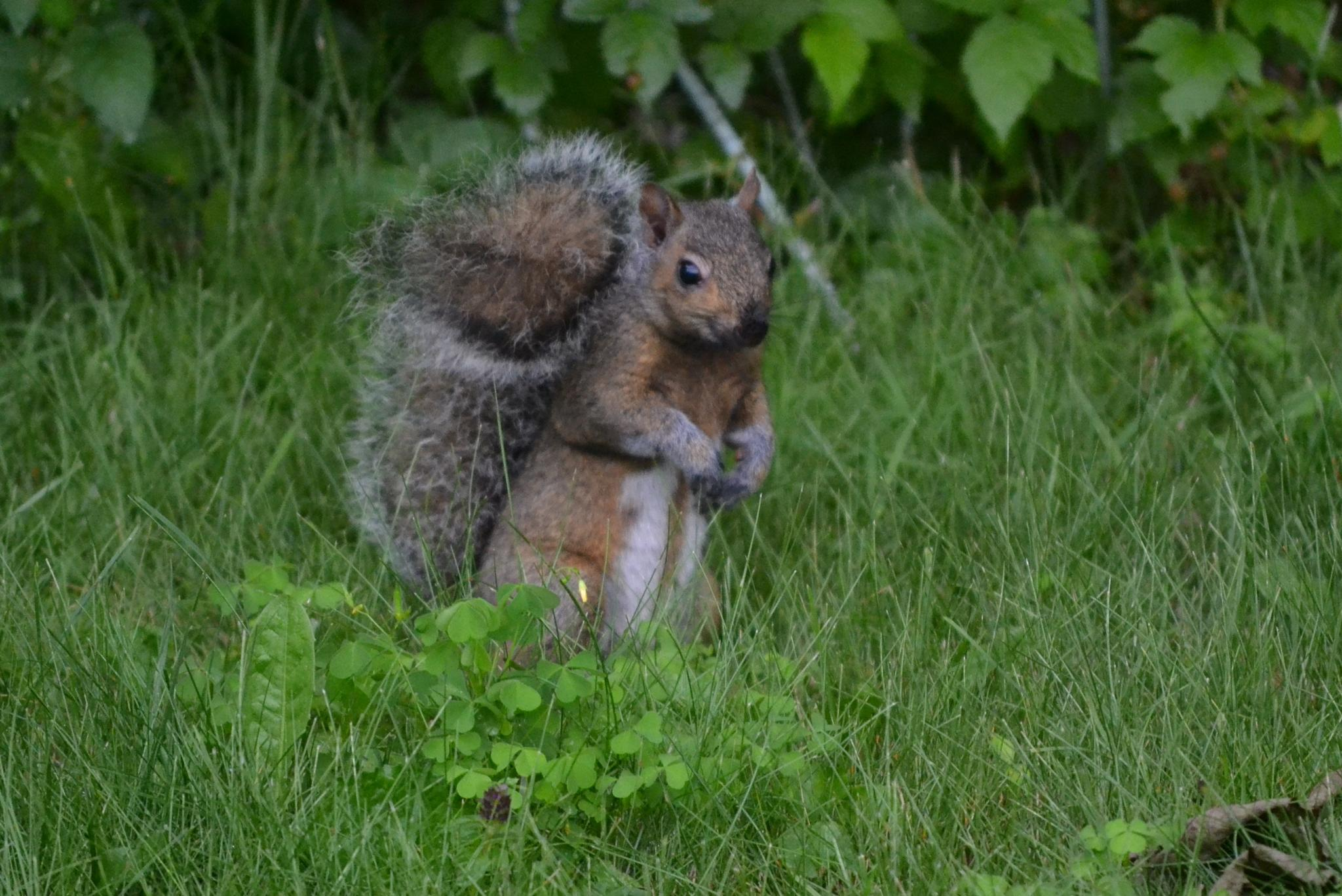 Photo in Animal #cool #squirrel #outside