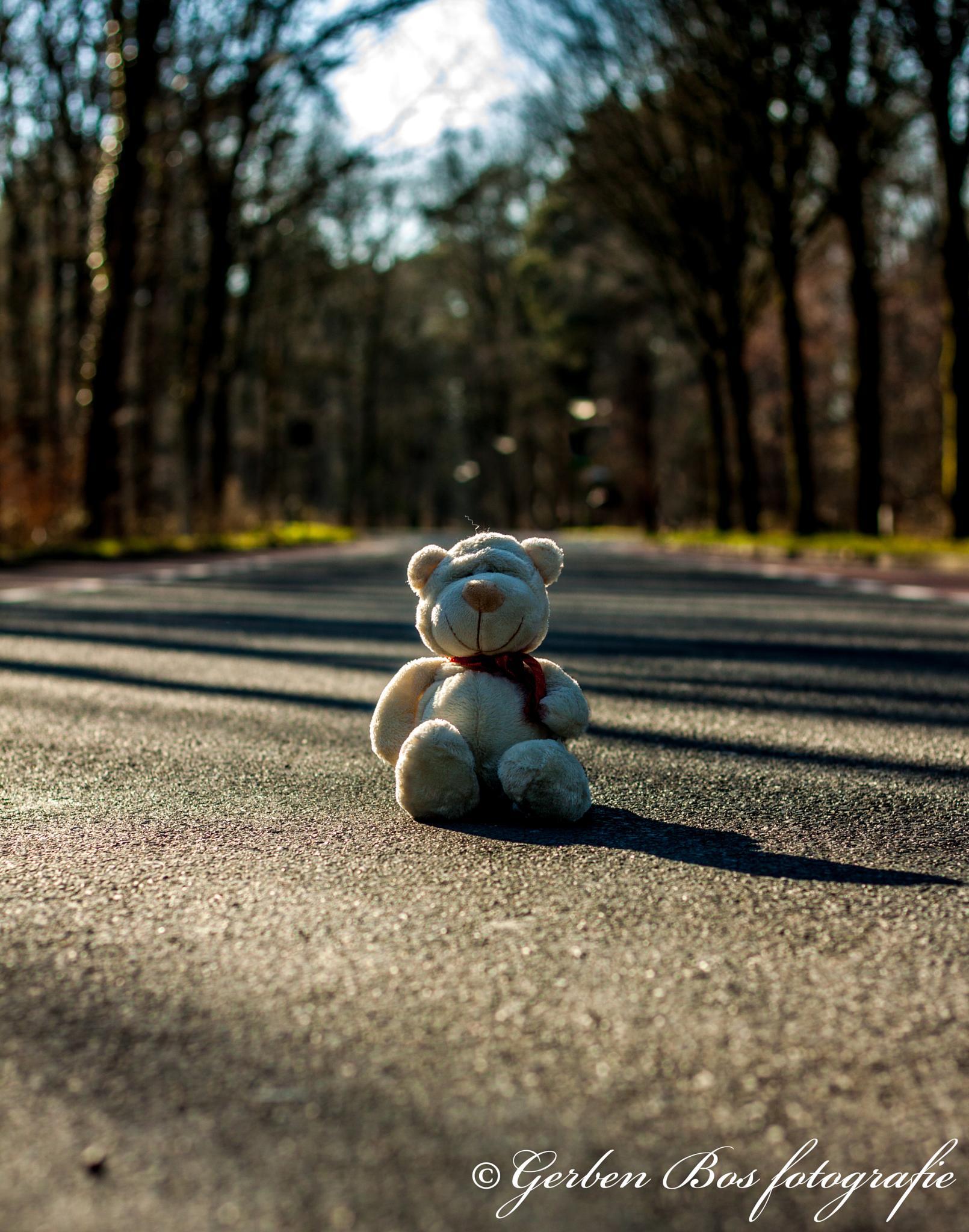 Photo in Street Photography #bear #street #shadow