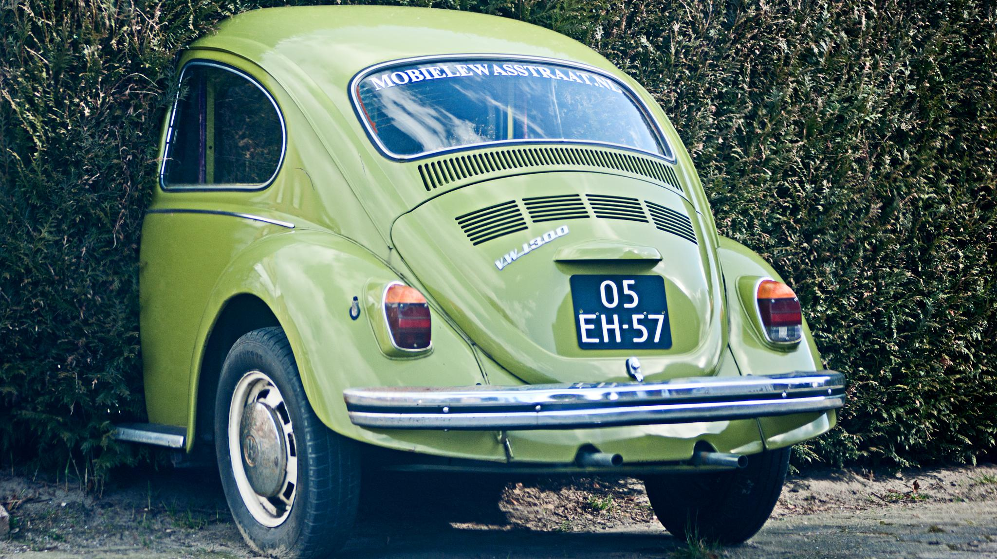 The Beetle by Mary Kouwenhoven