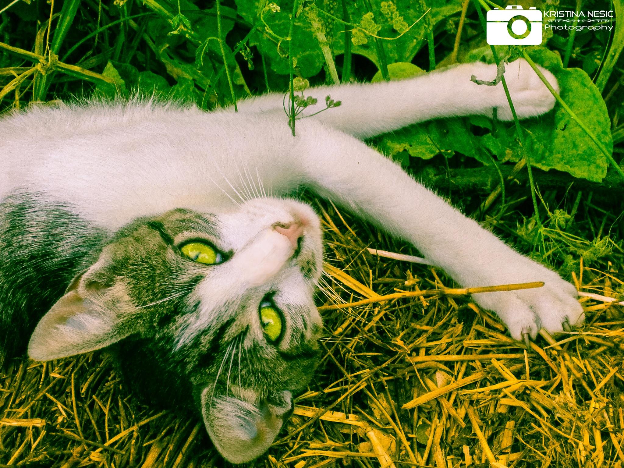 Hey kitty by Kikiwolf