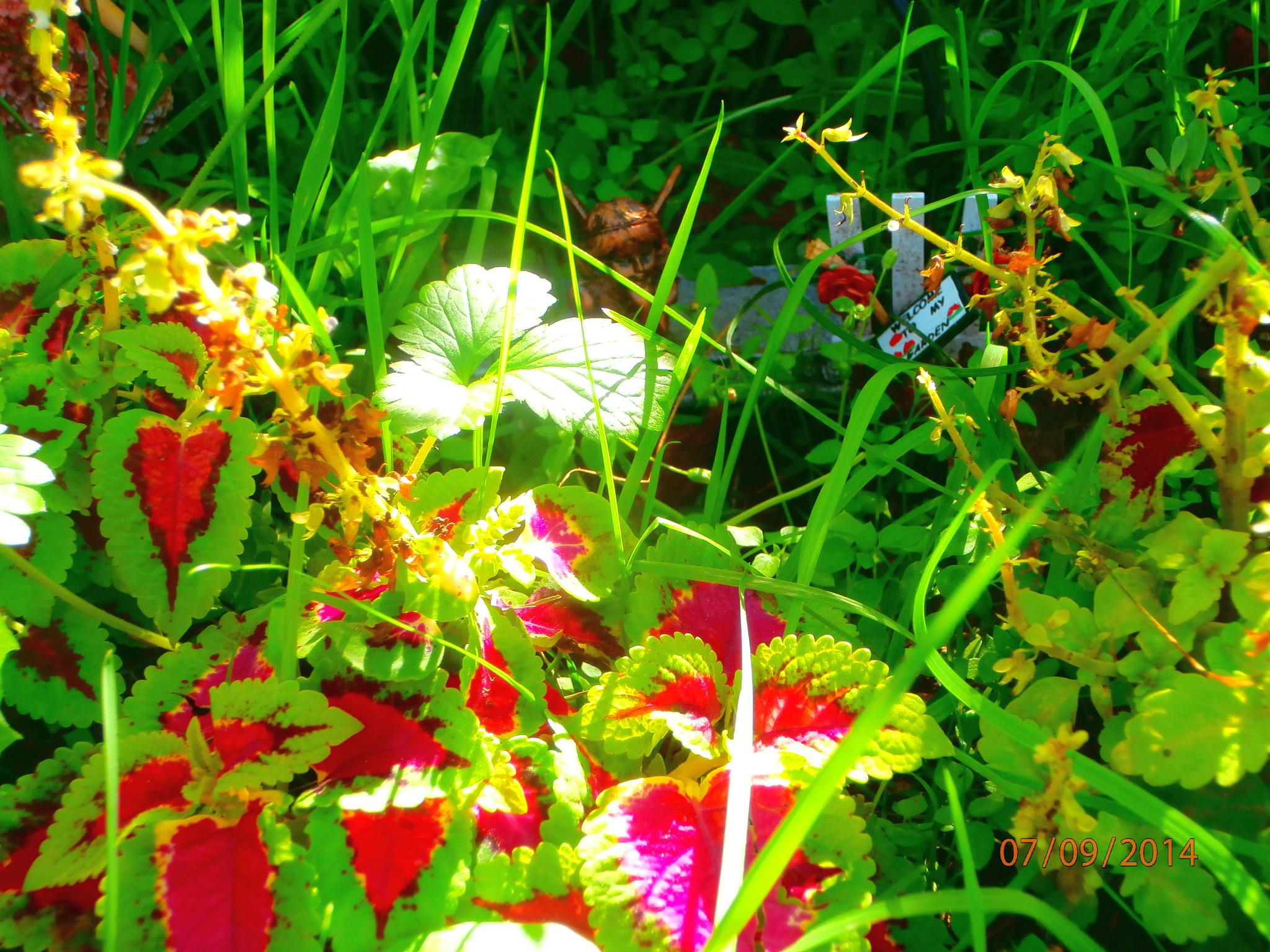 late summer fairy garden by tina.linge.3