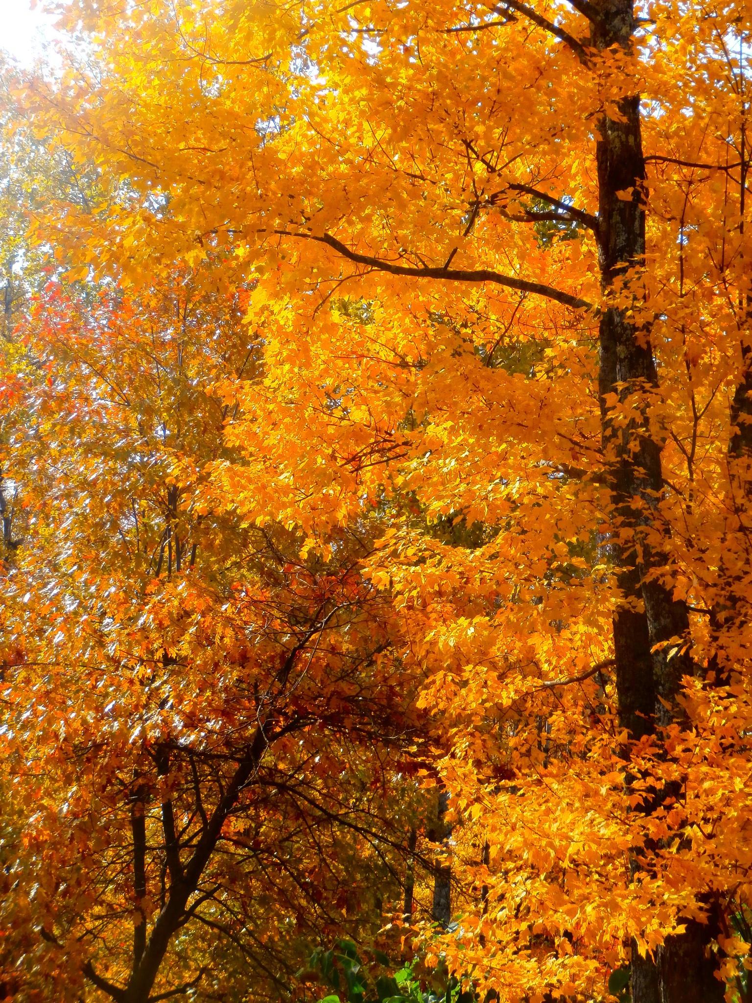flaming orange by tina.linge.3
