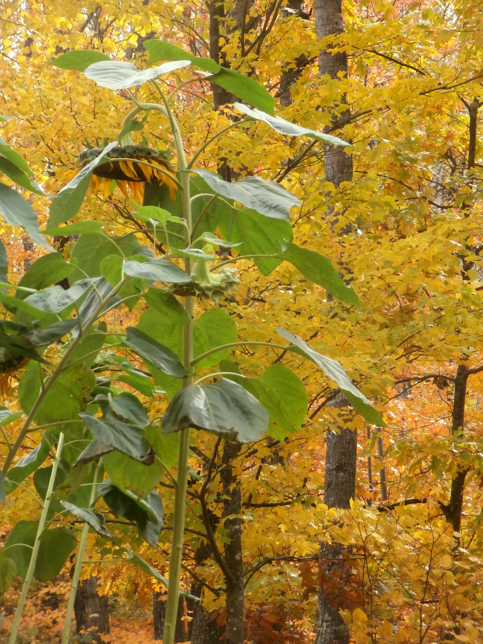 autumn leaves by tina.linge.3